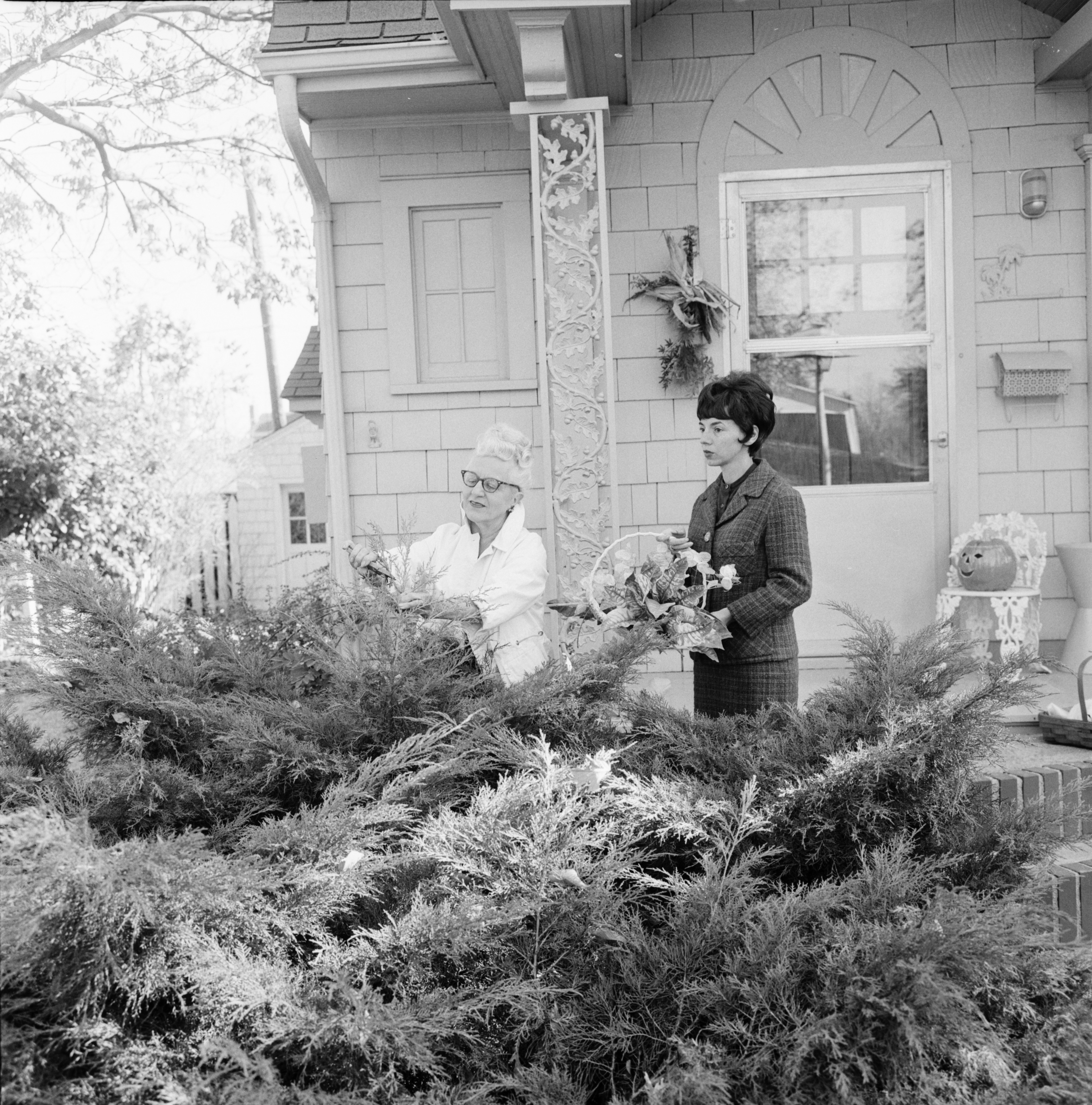 "Ann Arbor Garden Club Members Gather Greens for ""Arrangements for Festive Occasions"" Demonstration image"