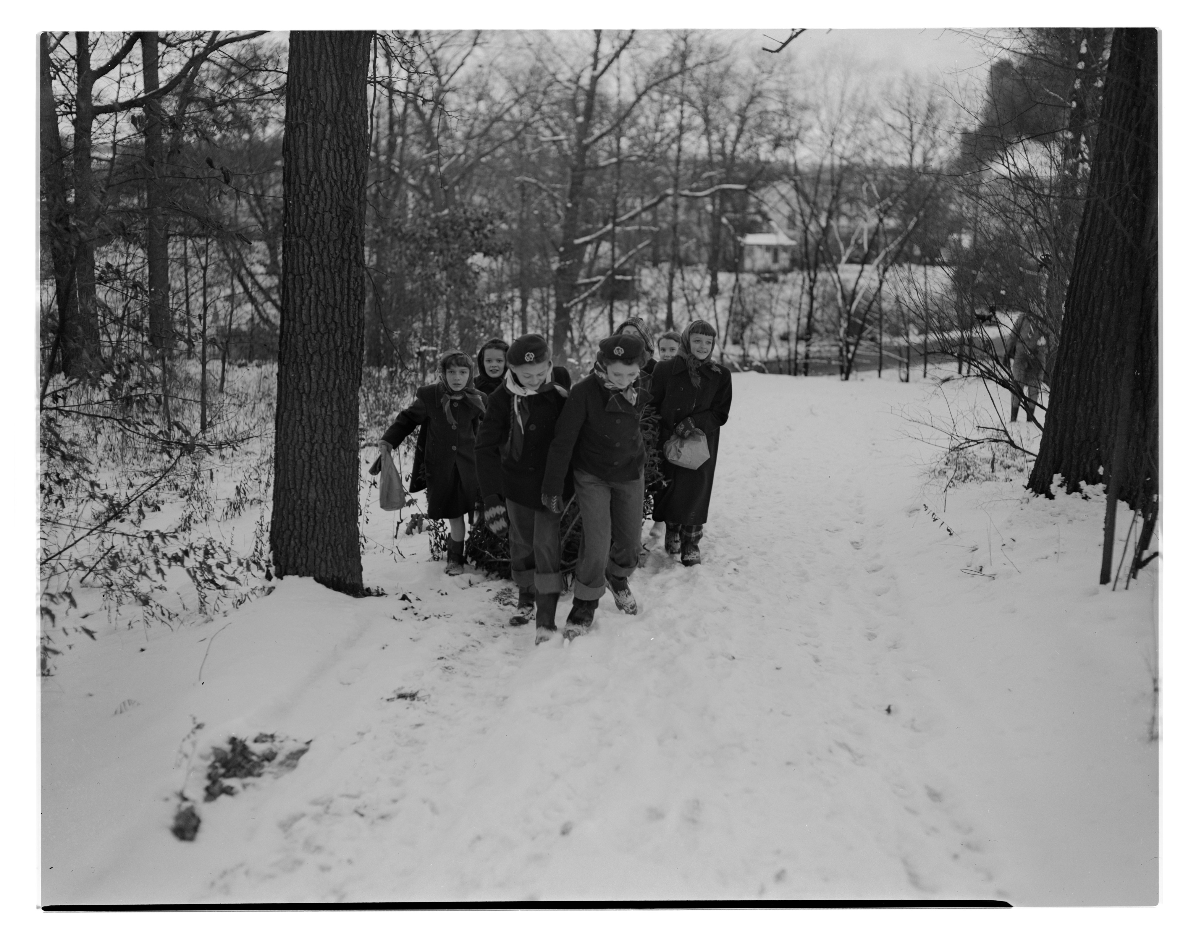 girl scouts drag christmas tree to camp hilltop december 1949 - Hilltop Christmas