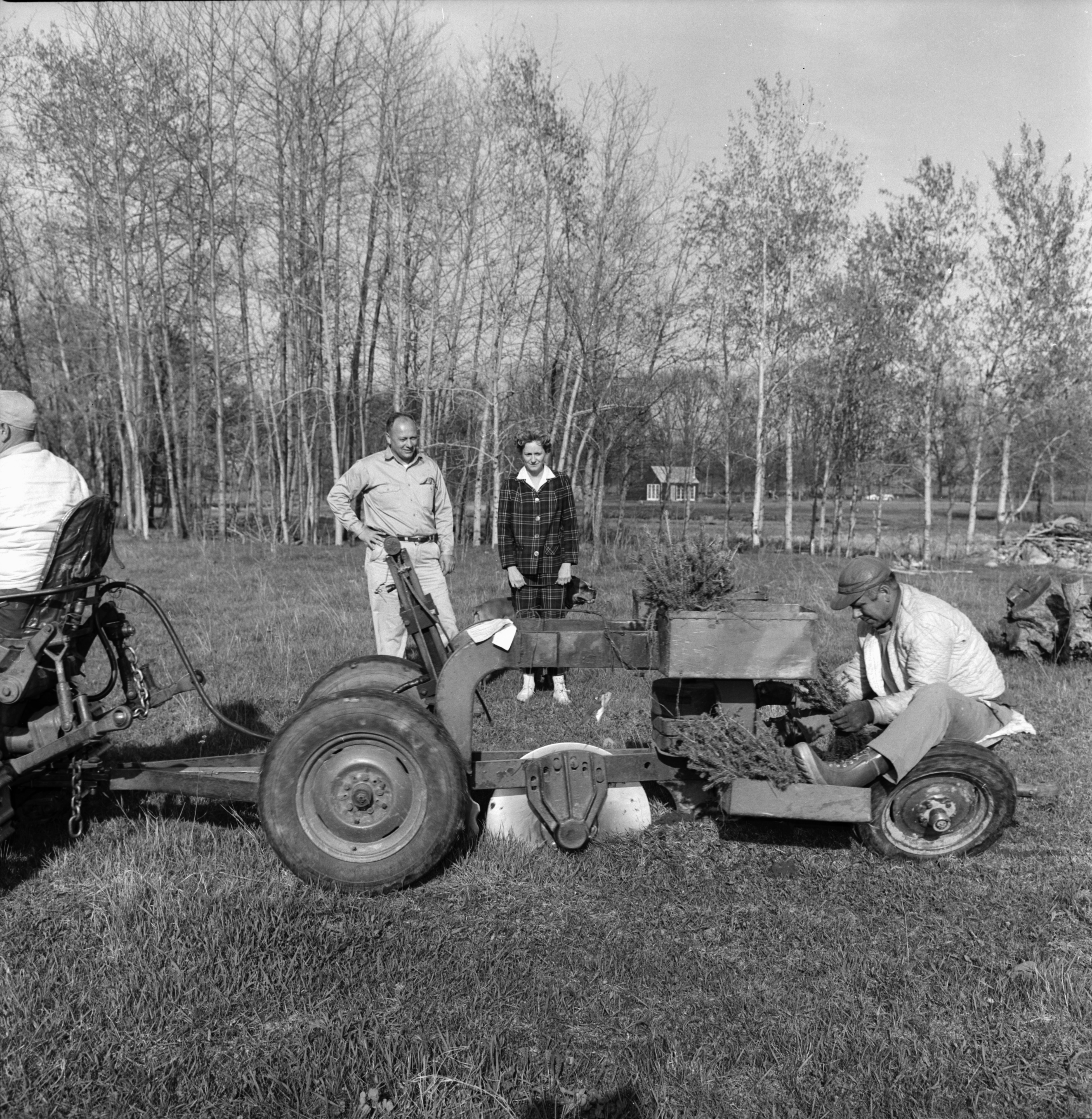 Mrs. Fred House at Tree Planting On Fred House Property on N. Territorial Rd, August 1963 image