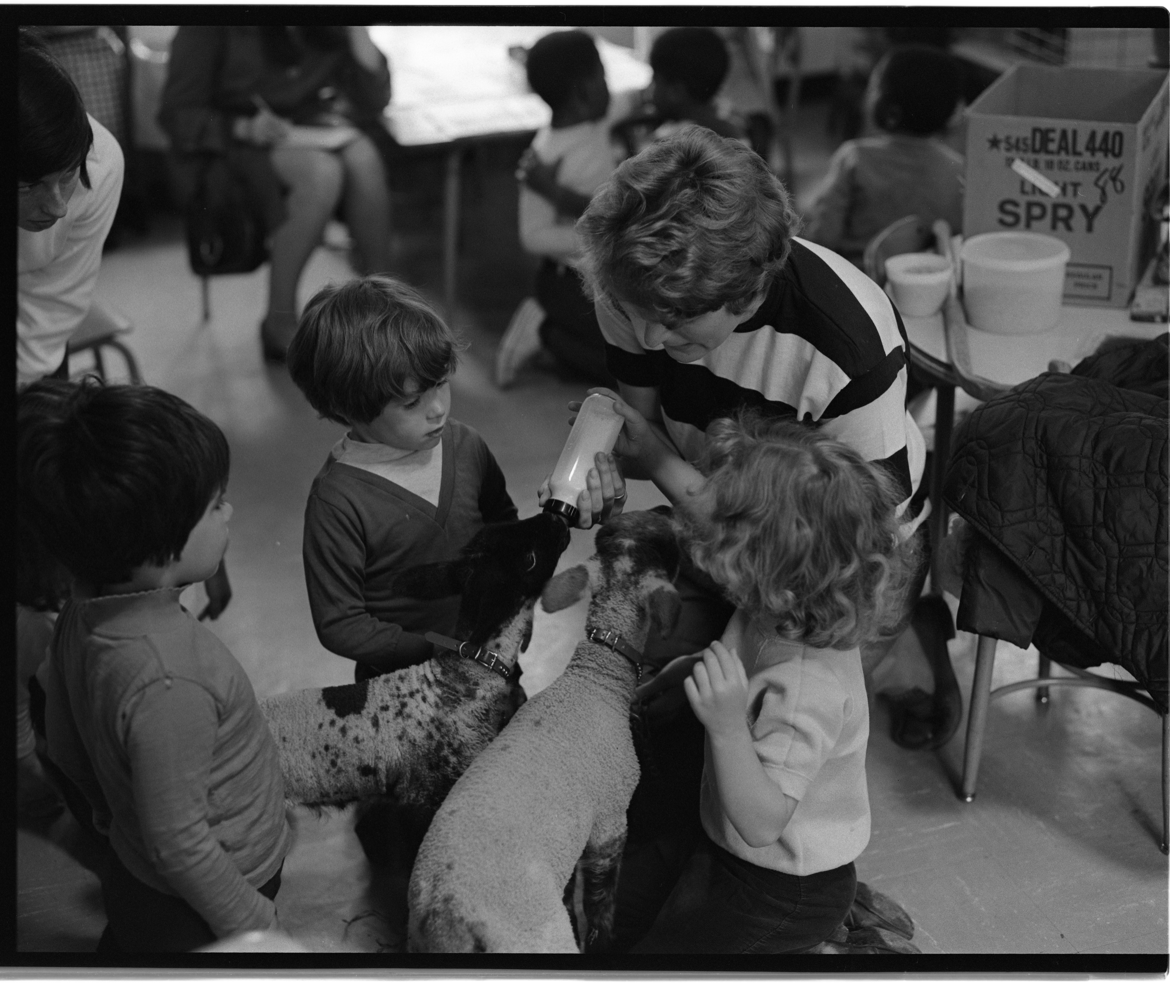 Children Feeding Lambs At Perry Nursery School, May 28, 1971 image