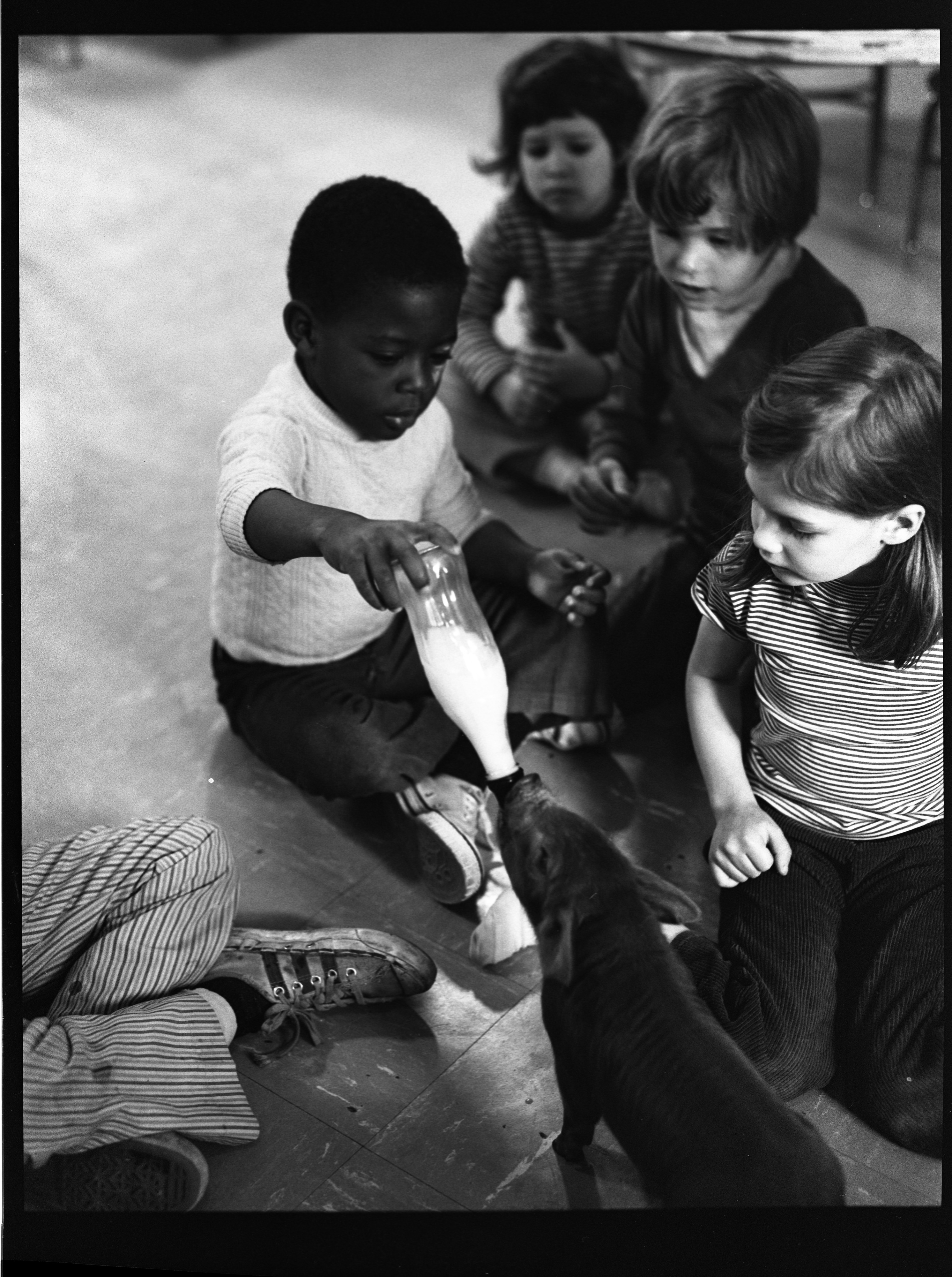 Children Feeding Pig At Perry Nursery School, May 28, 1971 image