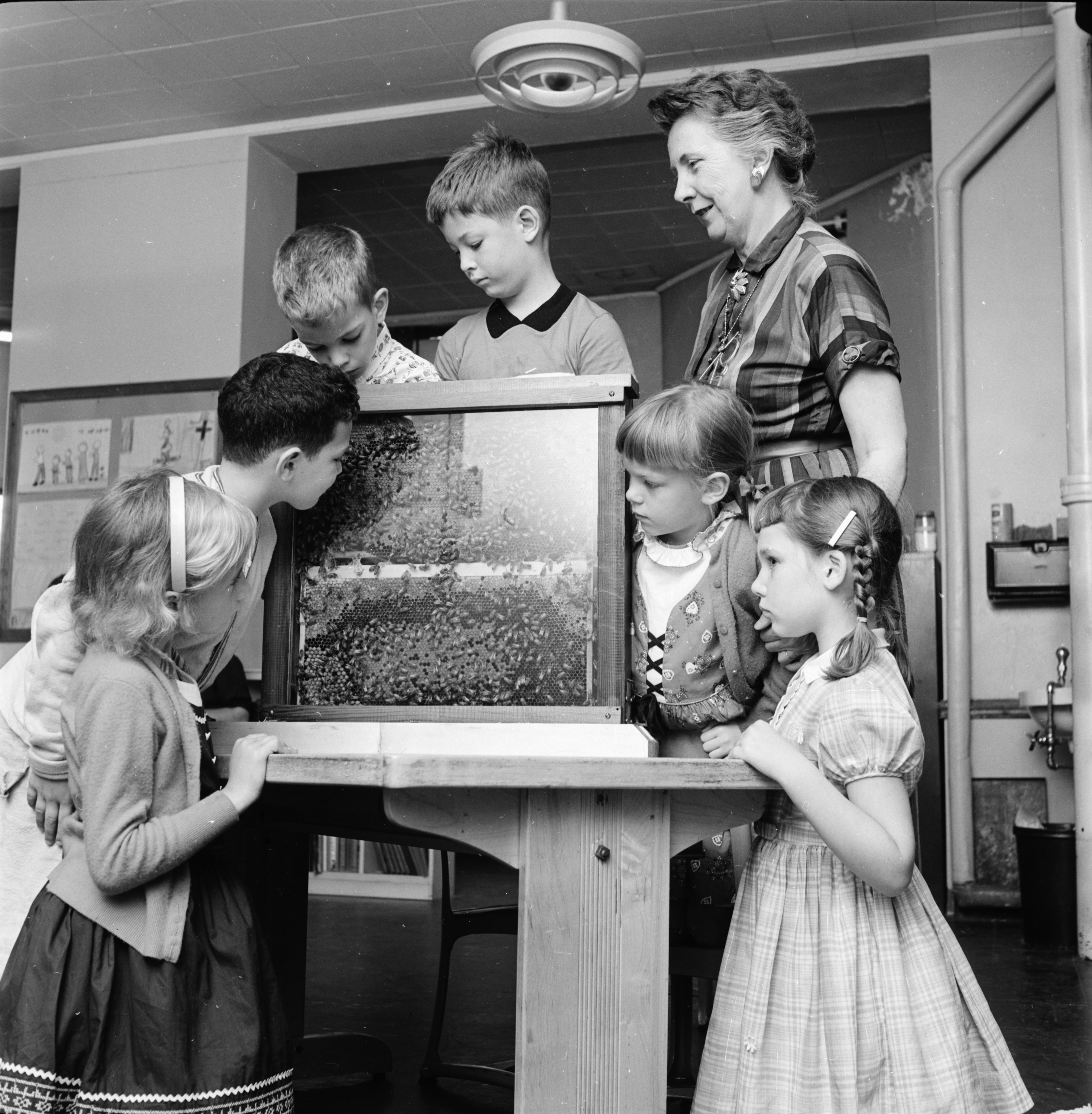Burns Park Elementary Students Study Bees in the Classroom, June 1960 image