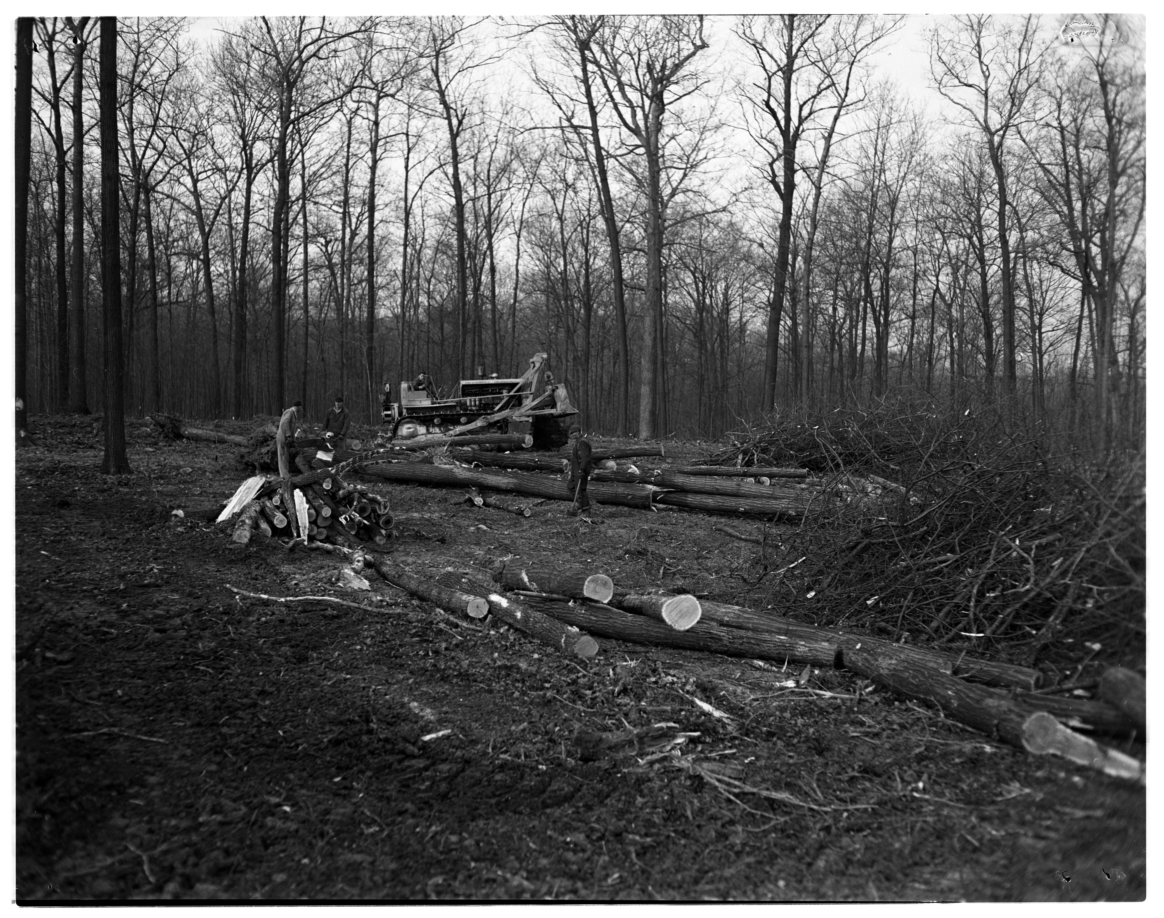 Clearing Eberwhite Woods For Construction of Eberwhite School, January 1950 image