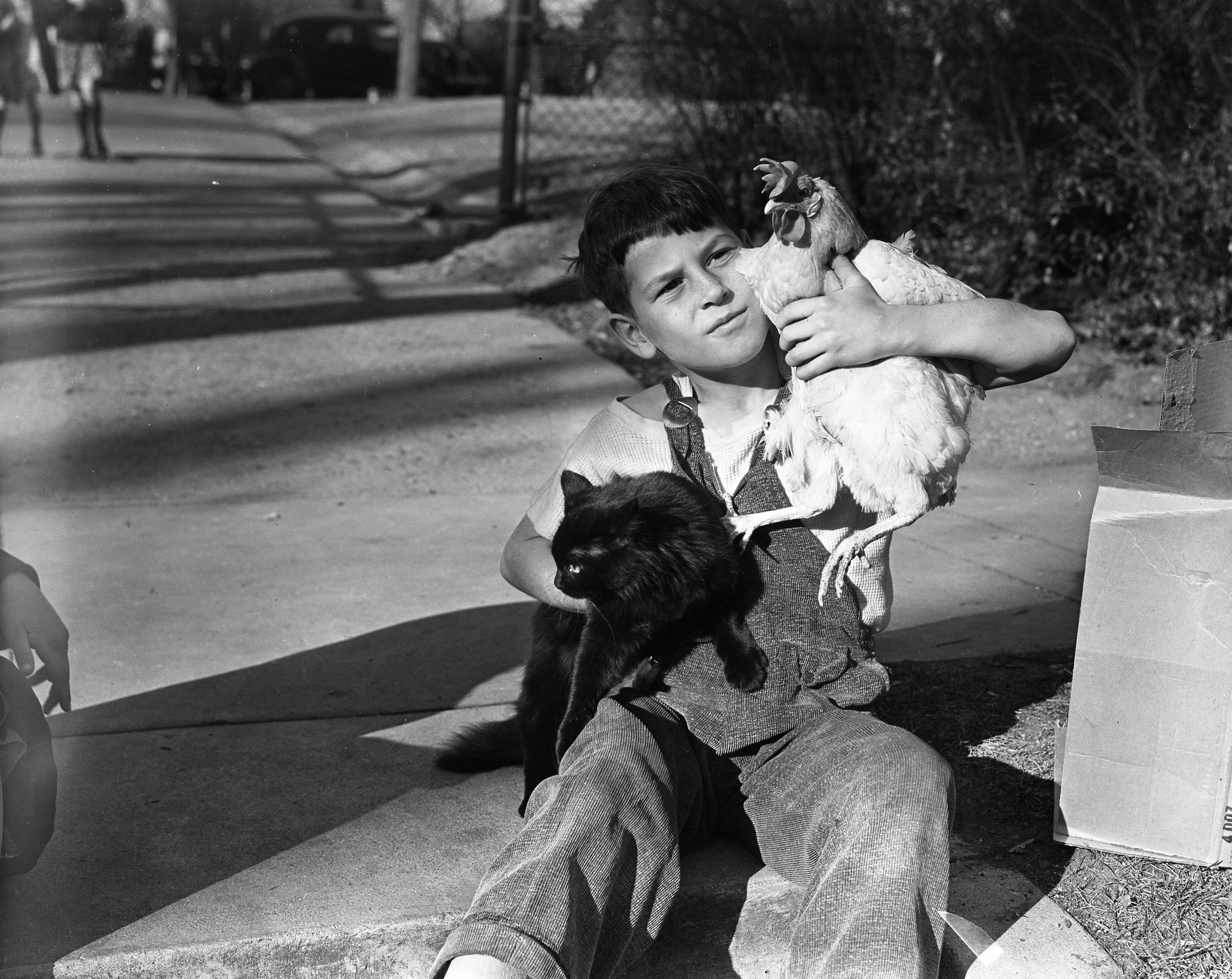 Perry School Student Gerald West Calms His Entries In School Pet Show, November 1938 image