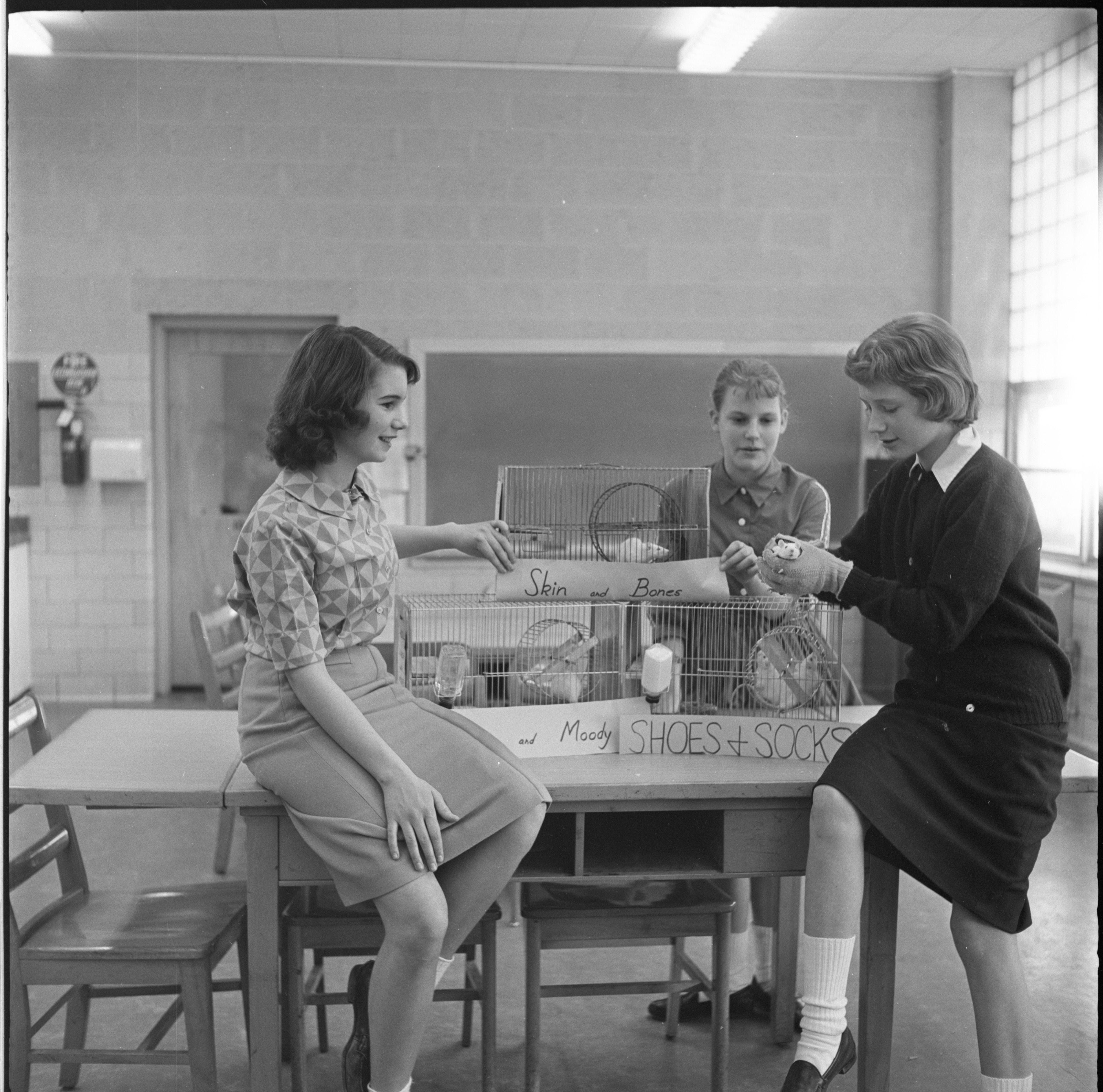 Tappan Junior High Students Conduct Nutrition Study With Rats, February 1961 image