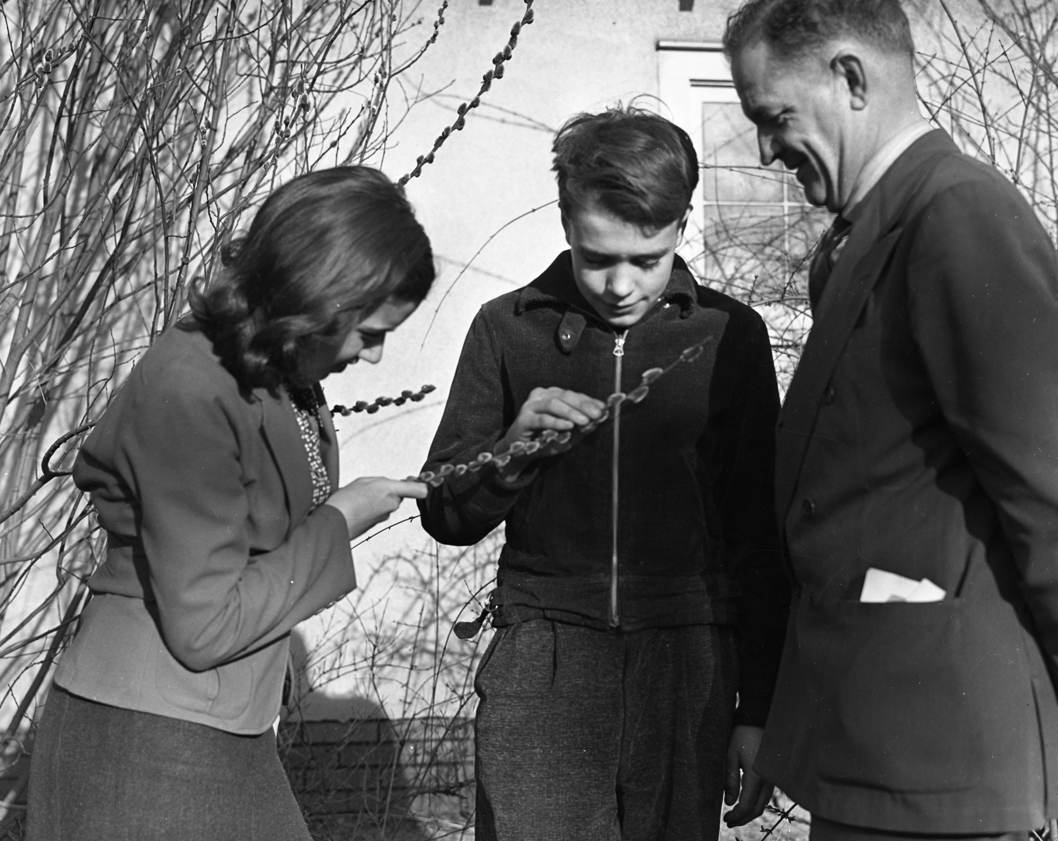 Bobby of Bobby and the Old Professor, looking at a Pussy Willow branch, 1938 image
