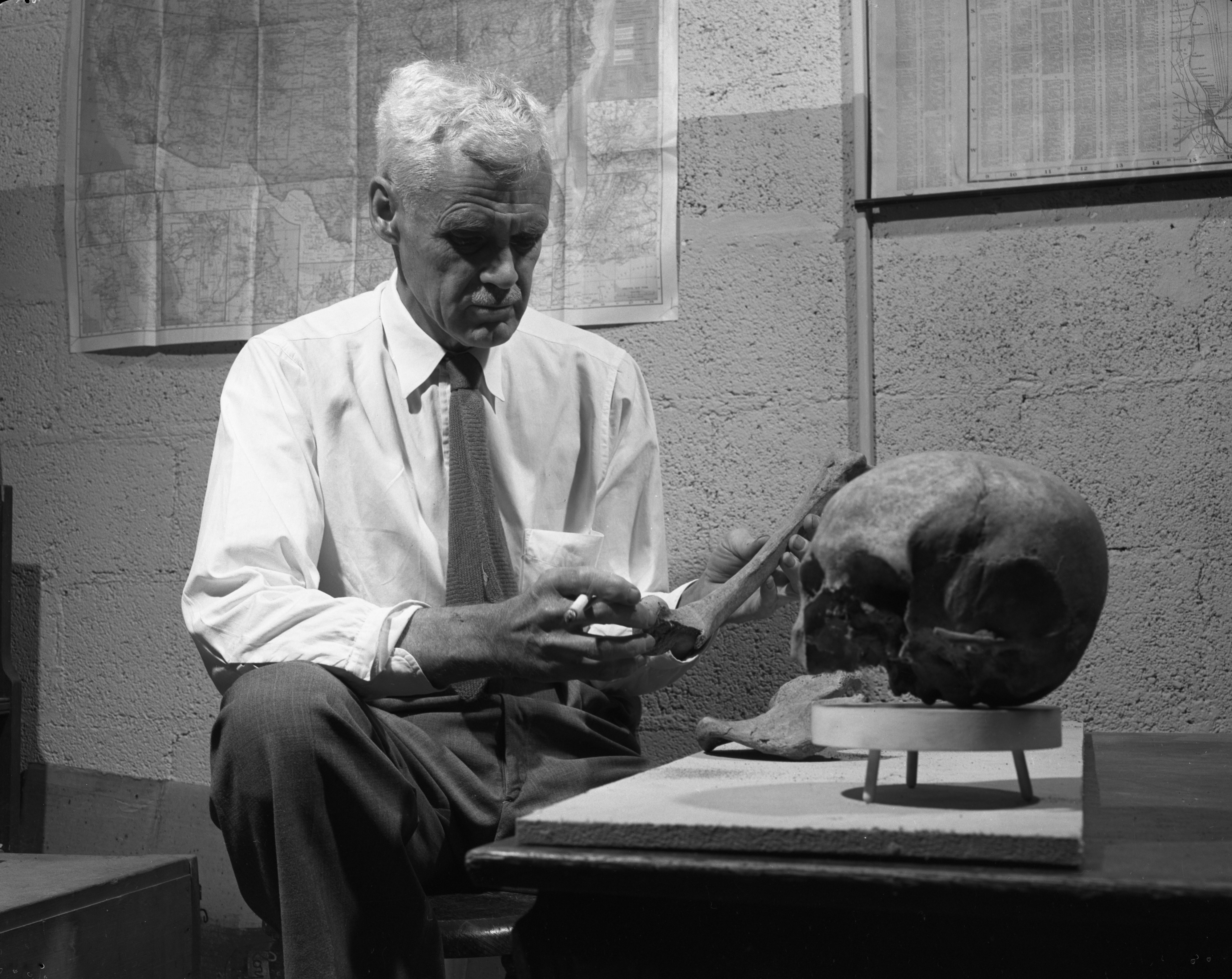 Dr. Emerson F. Greenman with remains of early American Indians found on Ellsworth Rd., September 1952 image