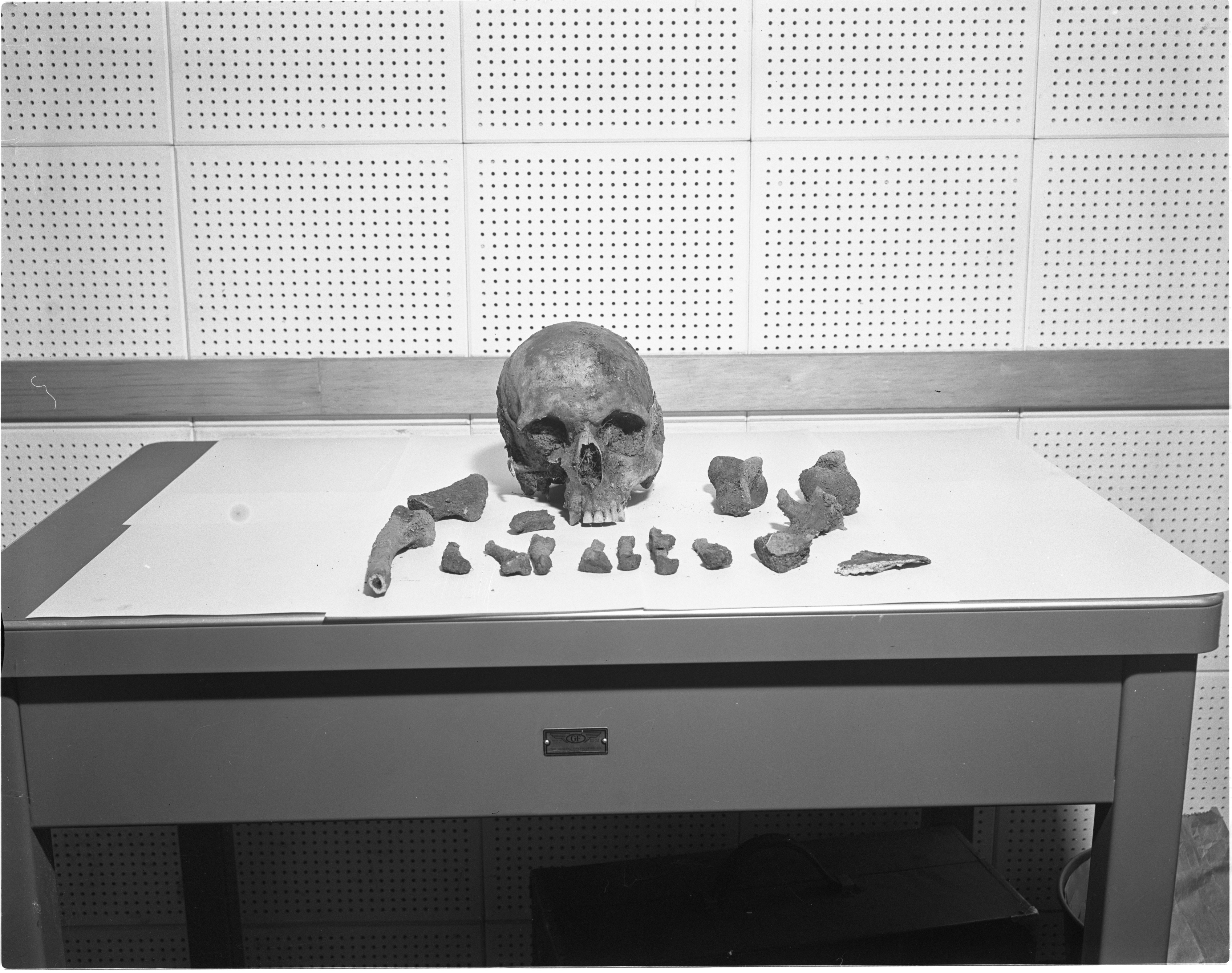 Human Skull And Bones Found On Site Of Former Felch Park, January 1957 image