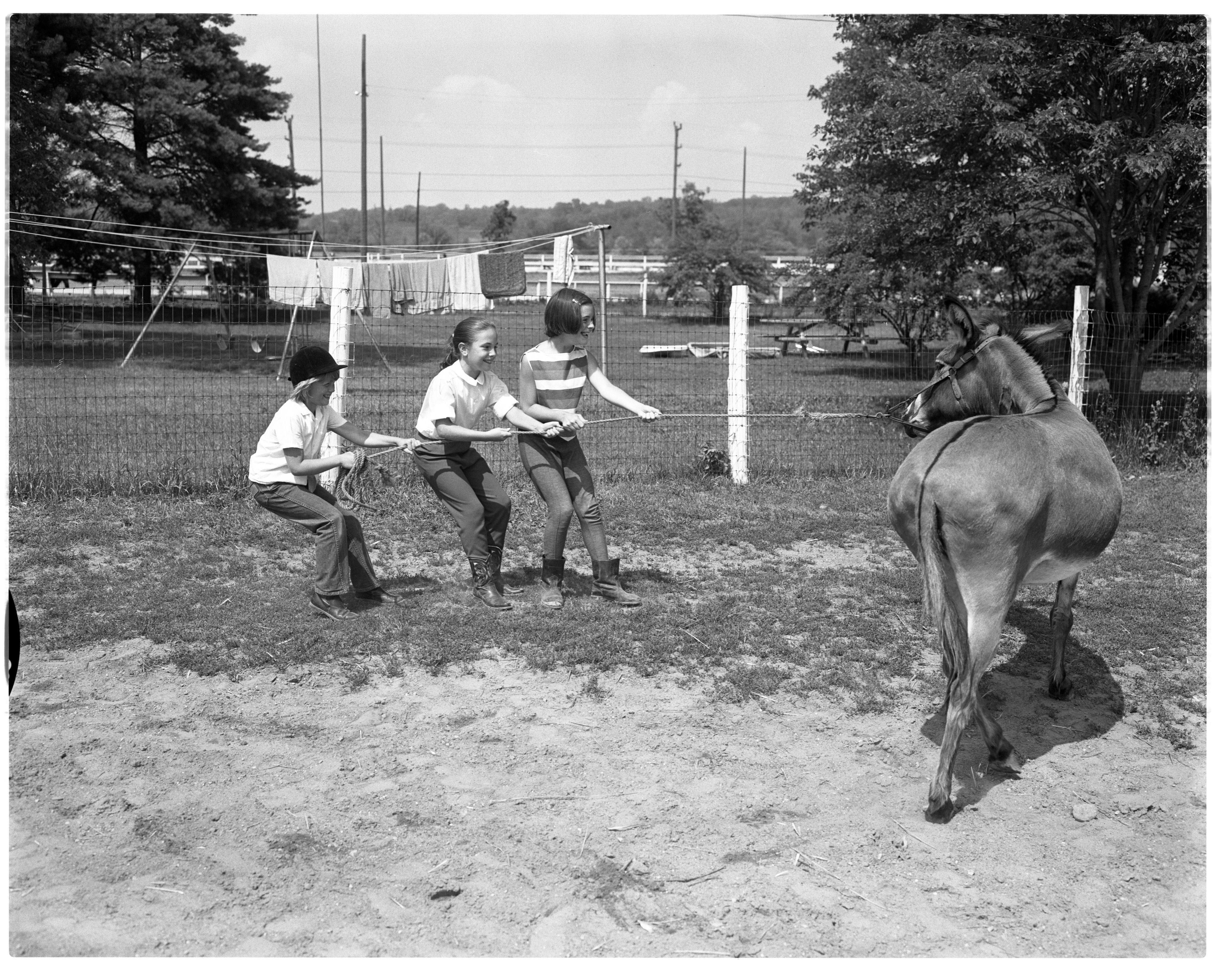 Children with Marilyn the Burro - Huron River Stables, July 1964 image