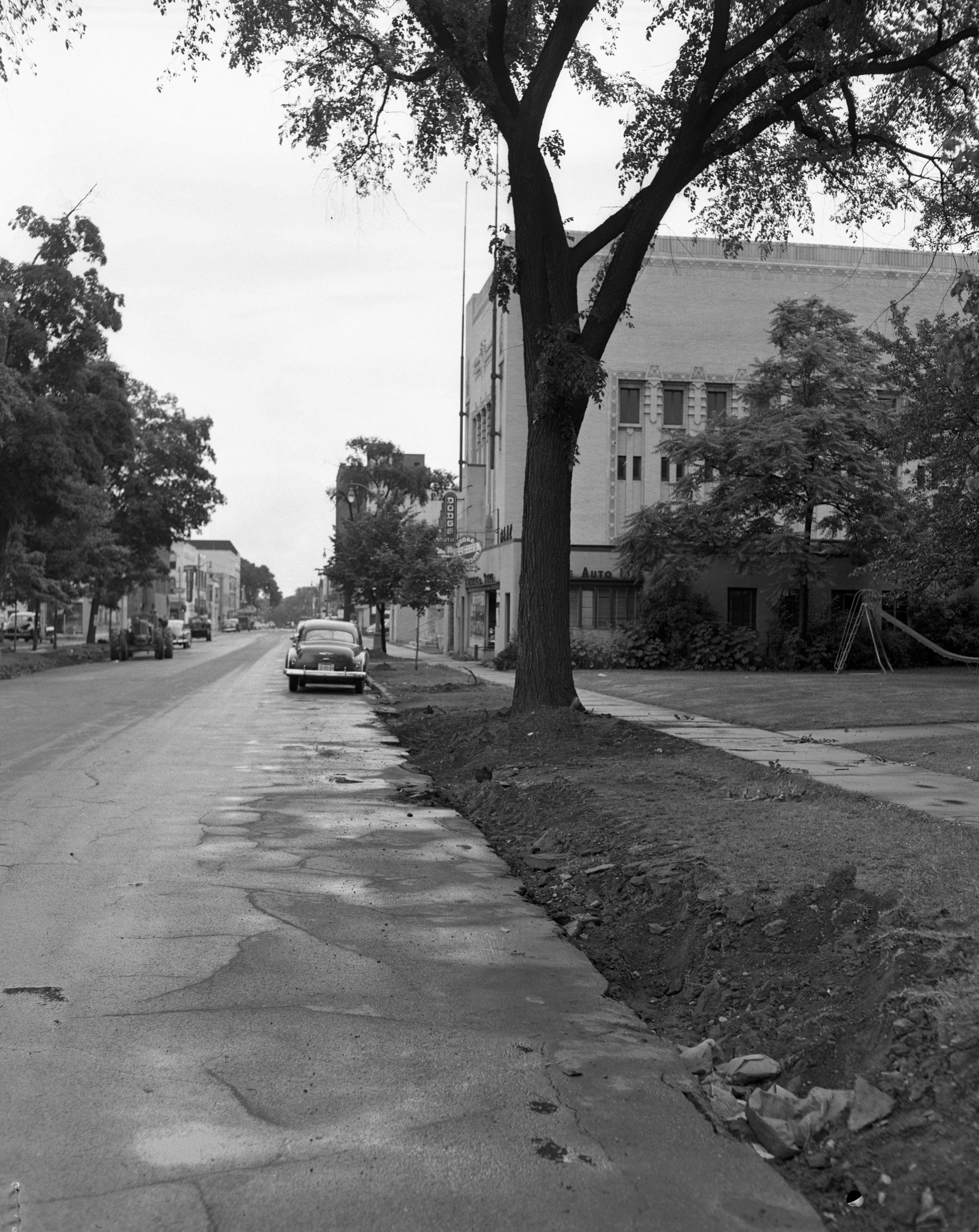 Elm Tree in front of YWCA, S. Fourth Ave, June 1952 image