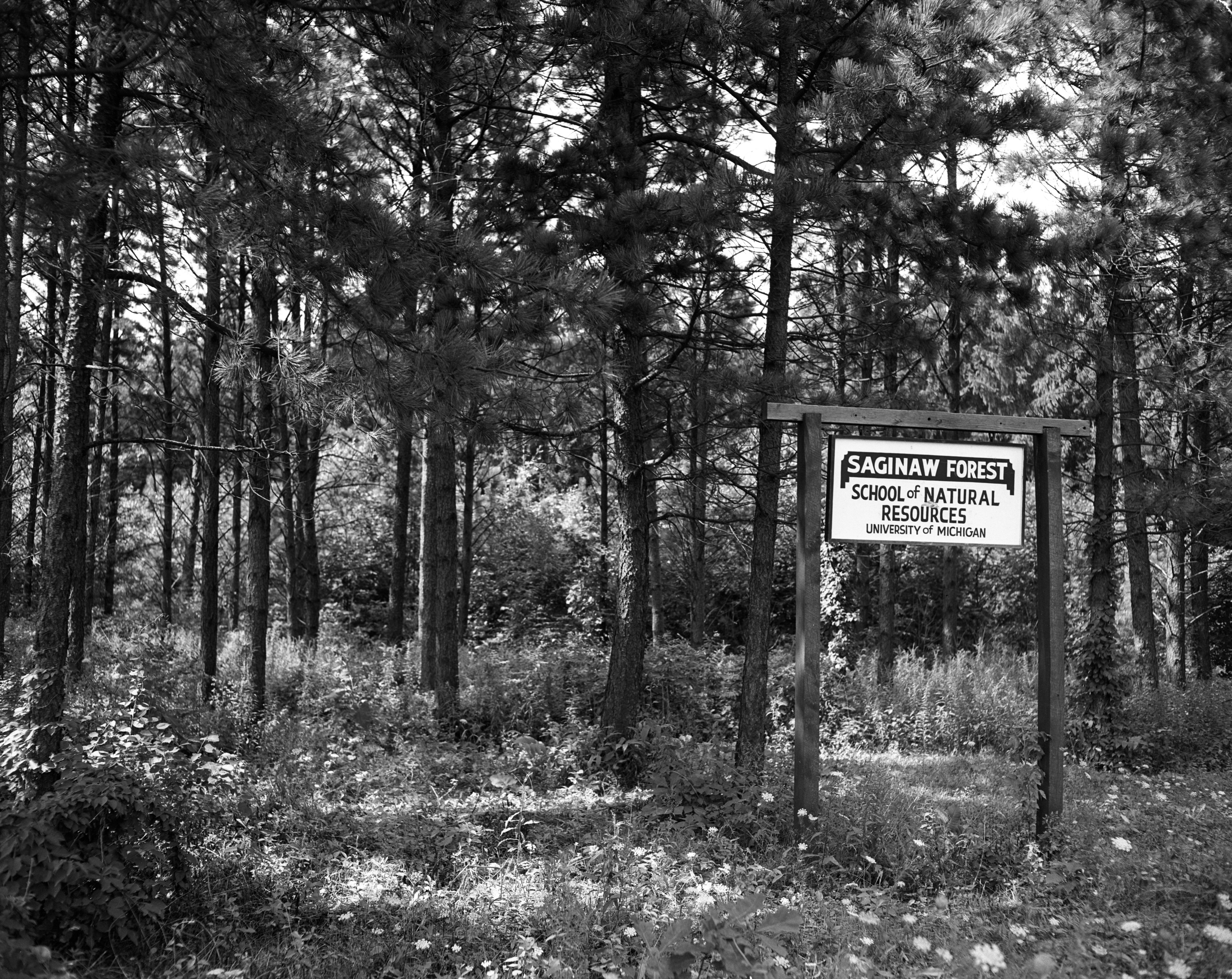 "University of Michigan's ""Saginaw Forest,"" August 1956 image"