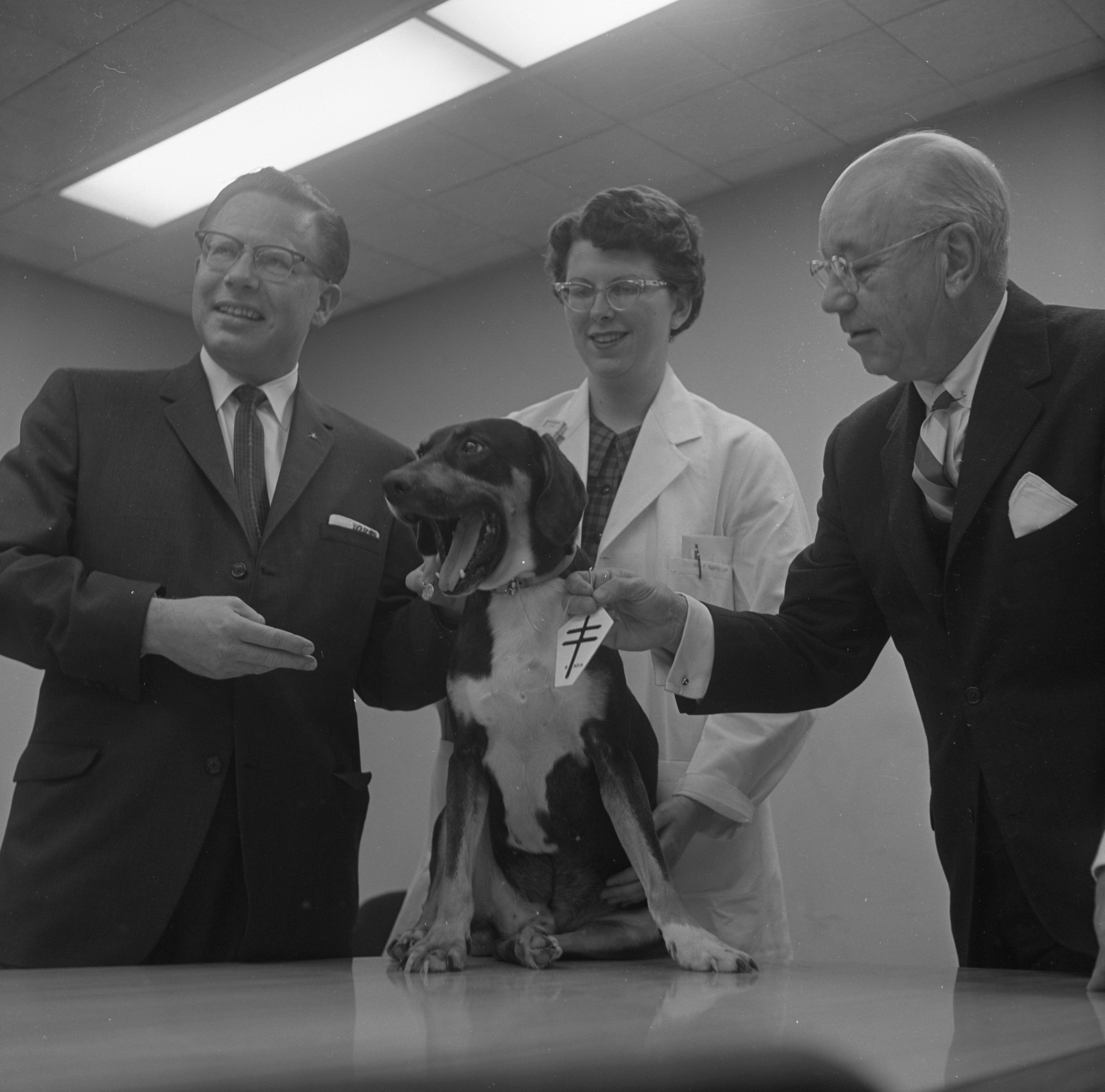 Homer, Hound Dog & Lung Transplant Recipient, Receives Two Medals For His Contribution To Science, April 1962 image