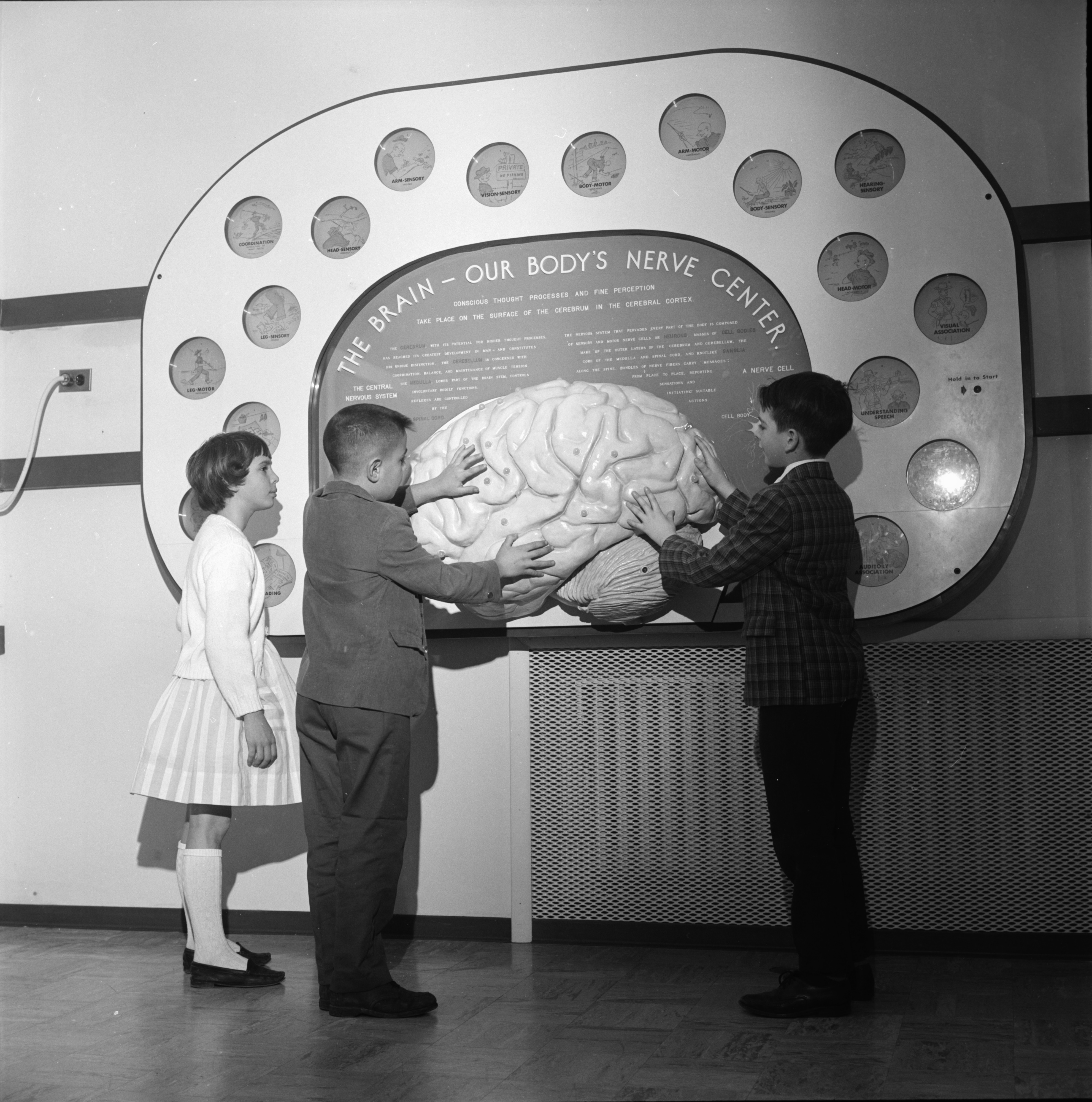 Nancy Bonedeo, Mike Dedes and Bob Boucher Examine Model Of Brain at University of Michigan Museum, February 1963 image