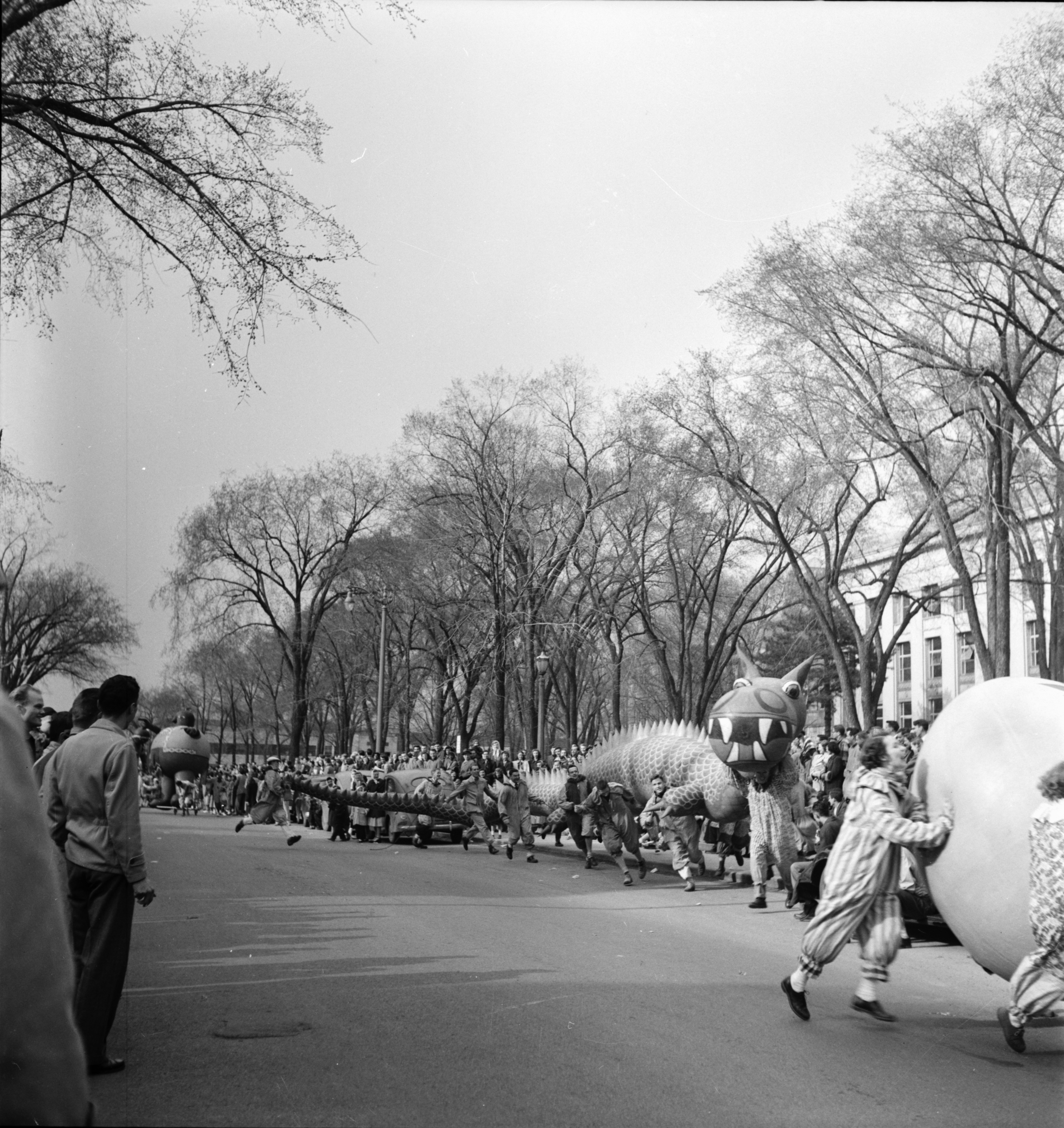 Parading by Angell Hall, U-M Michigras Parade, April 1950 image