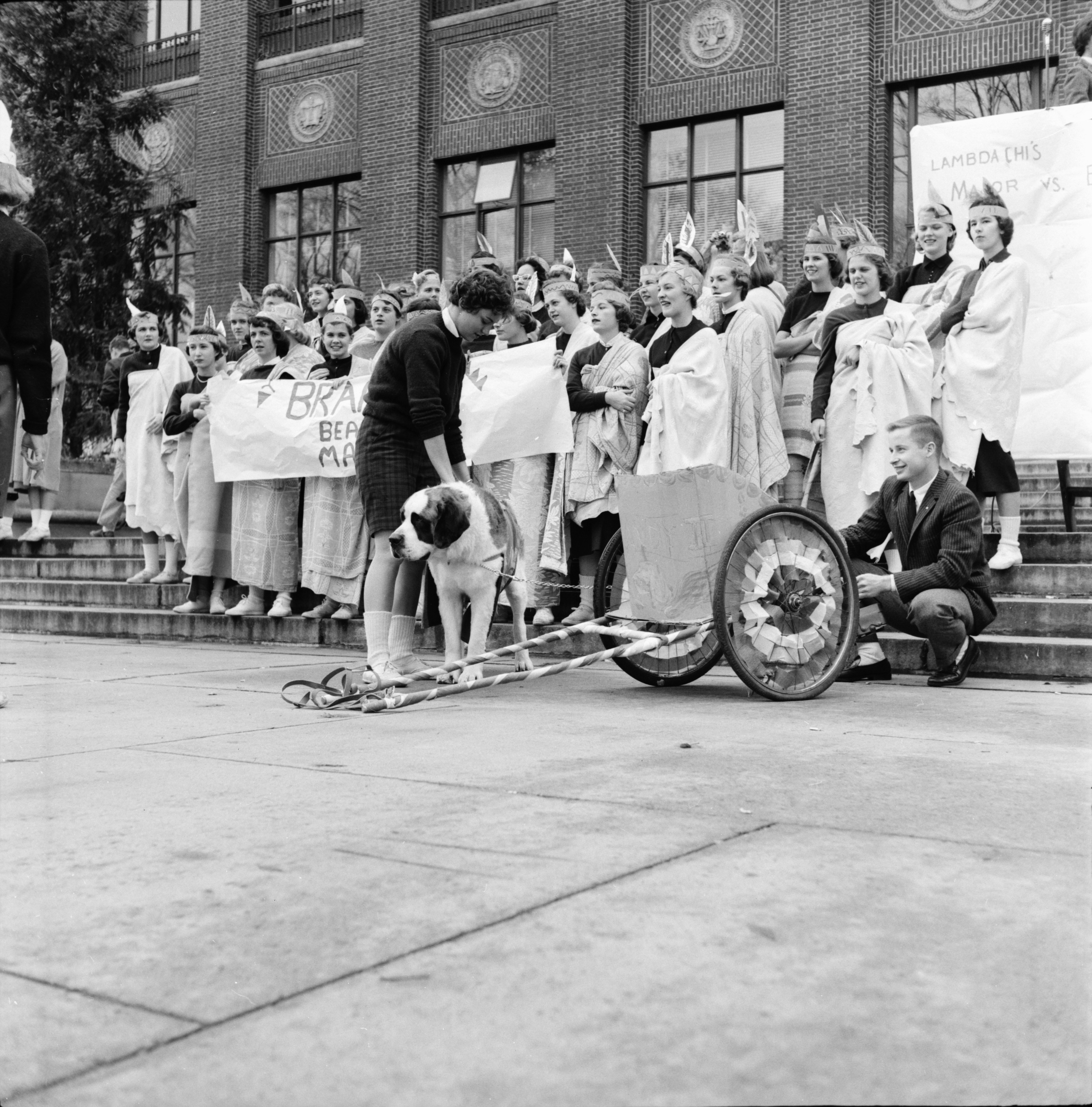 Brandy II, of Delta Upsilon Fraternity, runs in chariot race on the U-M Diag, October 1958 image