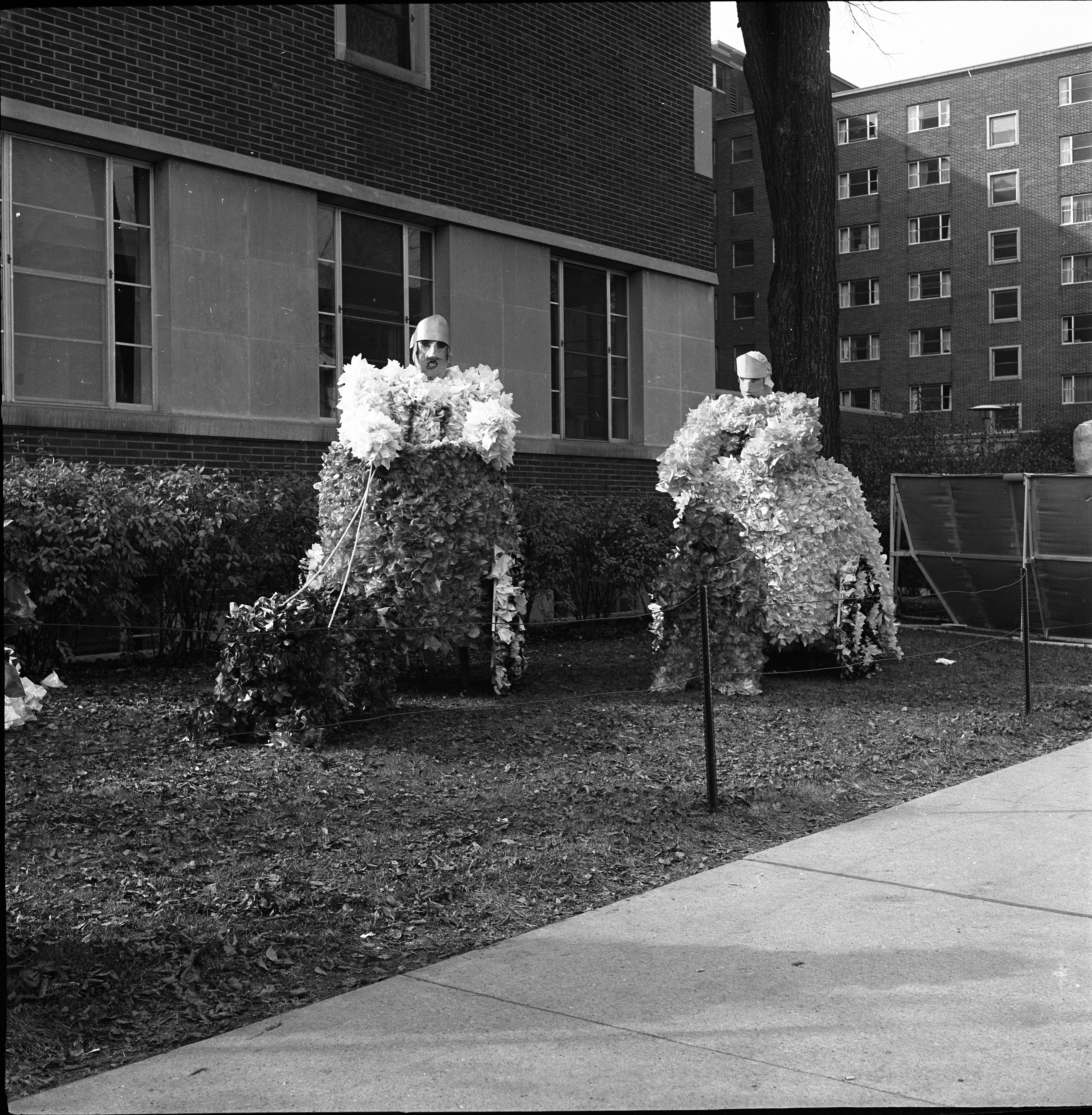 University of Michigan Homecoming Display, With Men On Chariots, October 1960 image