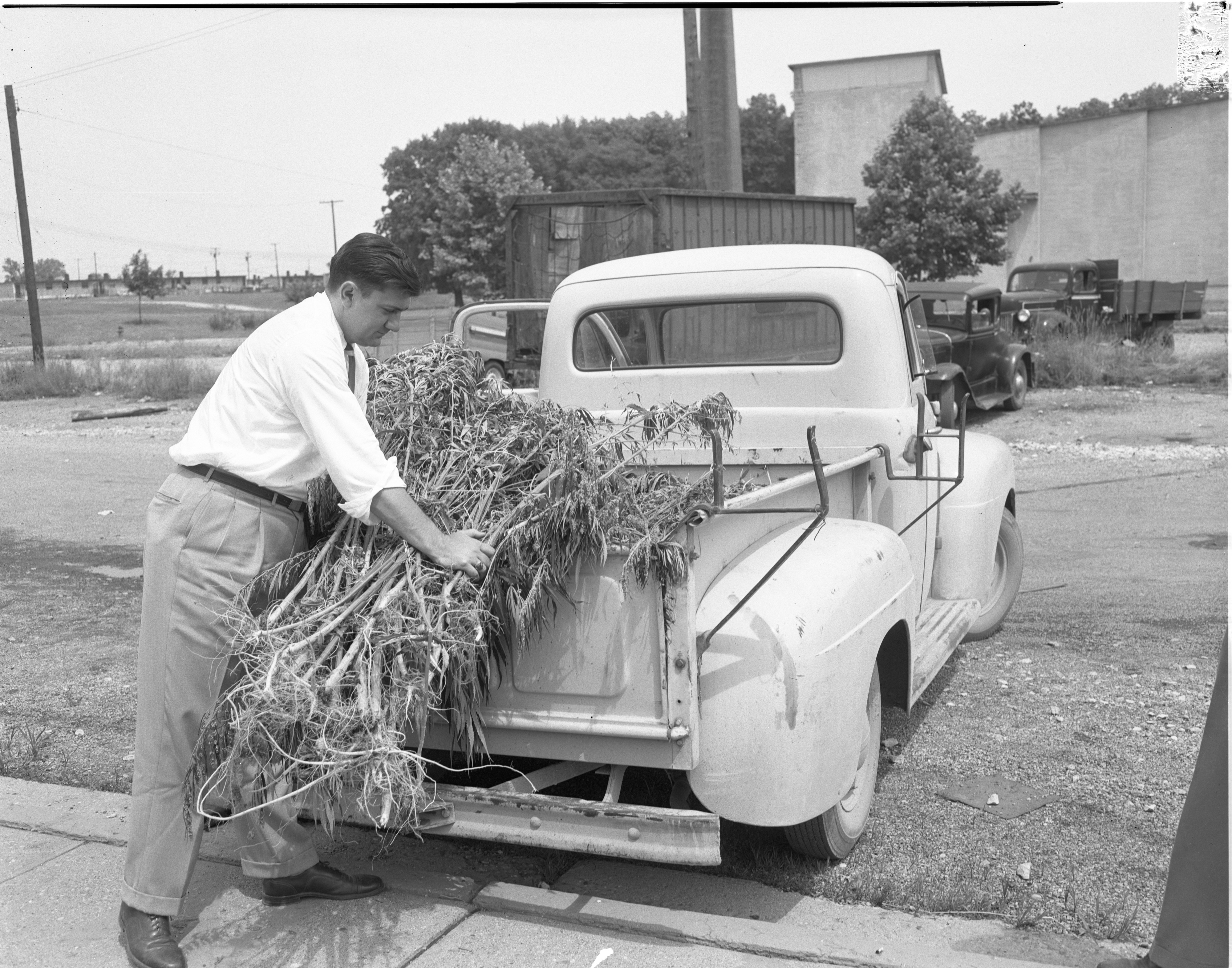 Detective Sgt. Melvin Fuller With Confiscated Marijuana Plants, July 1954 image