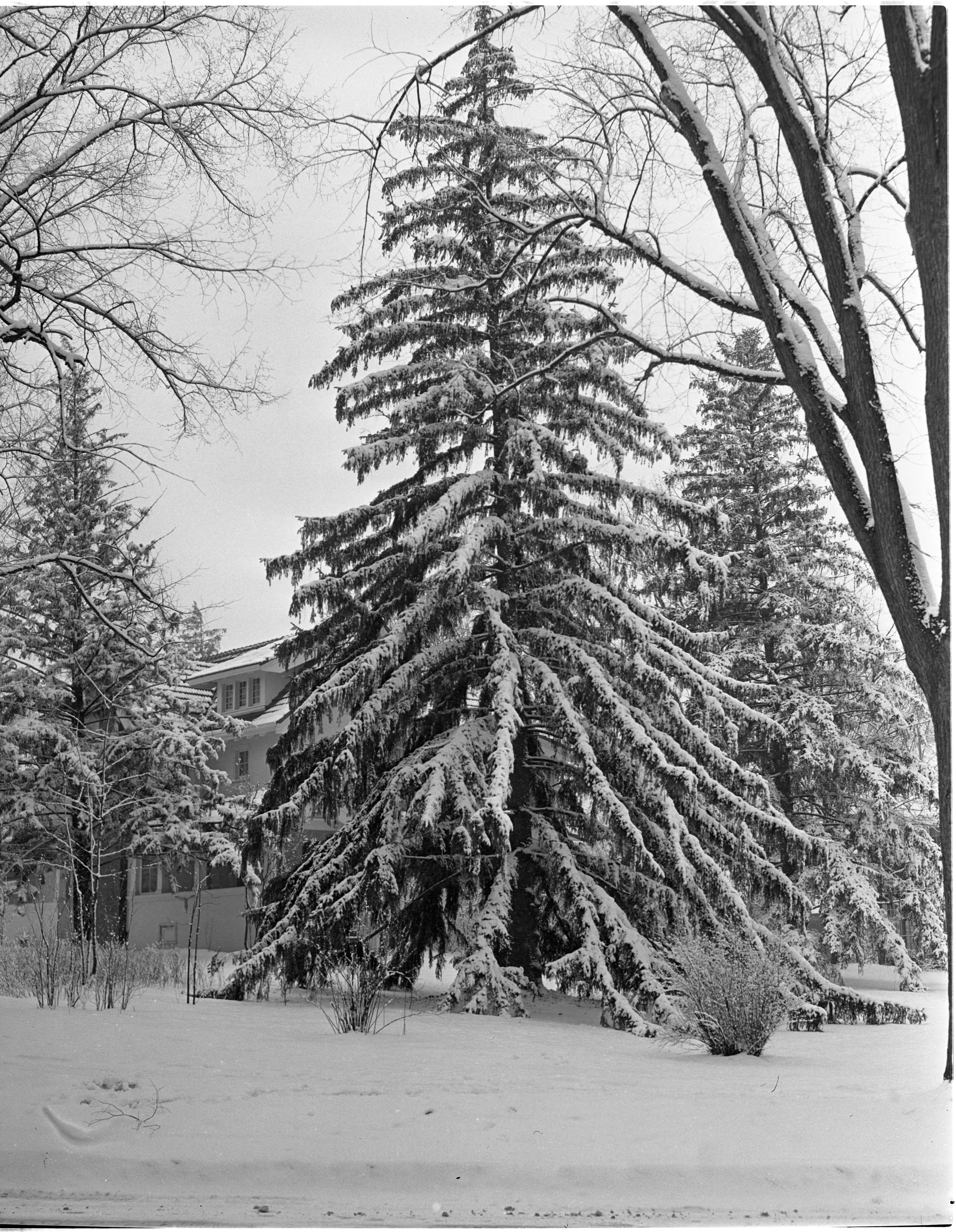 Snow Blankets The Trees At 1746 Washtenaw Ave, February 1940 image