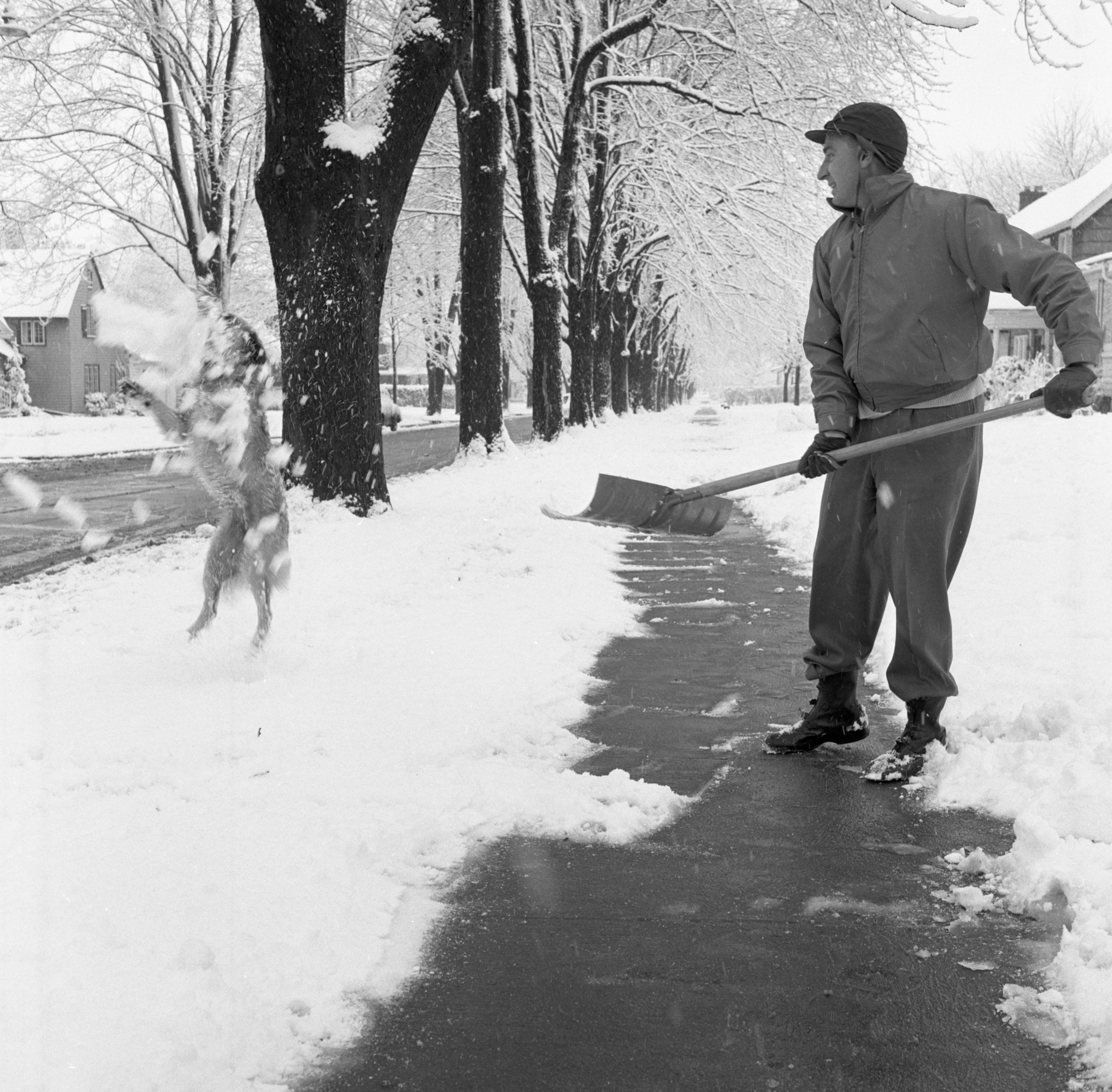 Man & Dog Shoveling Snow, December 1957 image
