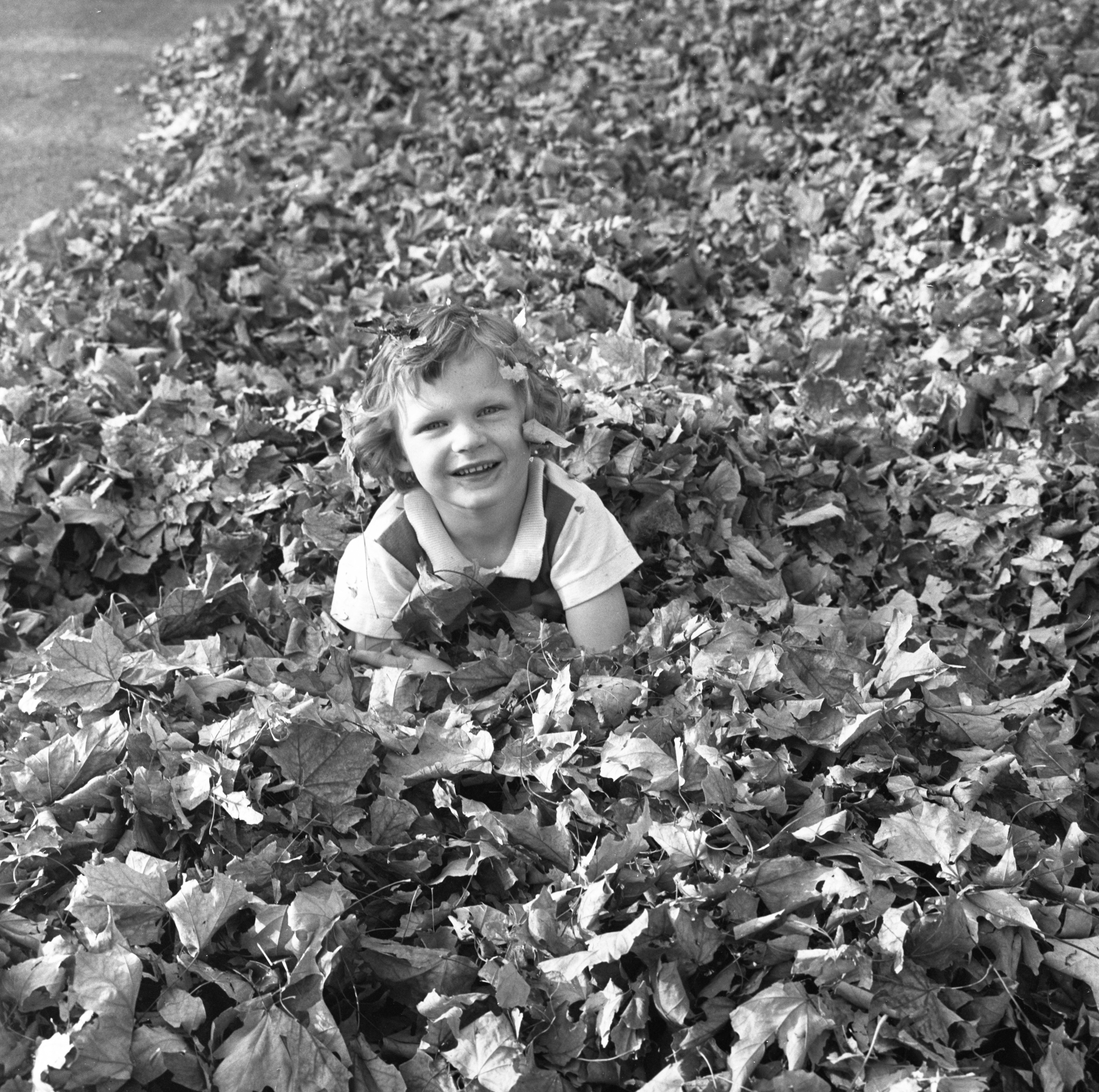 Marjorie Price Plays In A Pile Of Leaves, October 1963 image