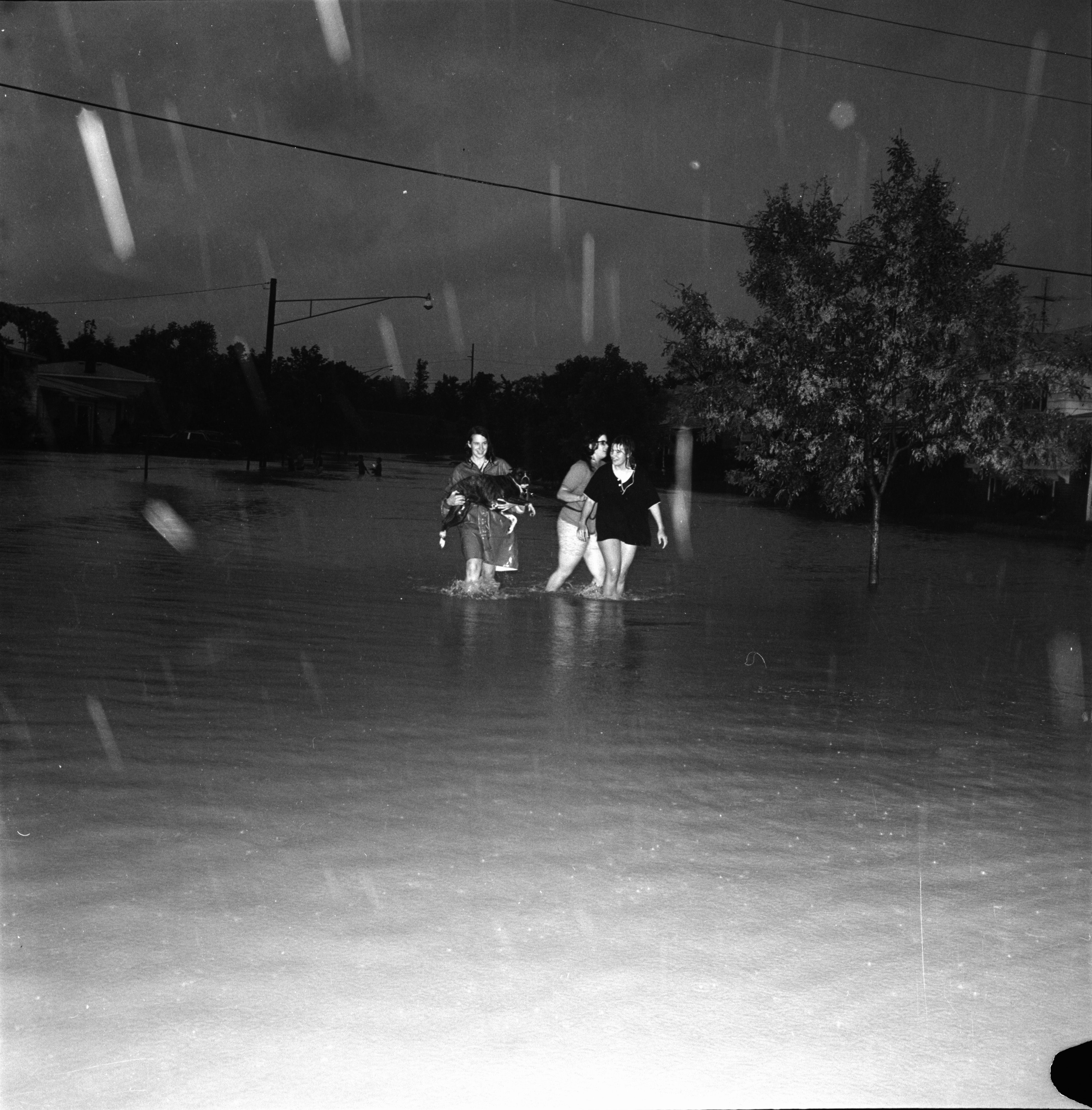 Rescuing a Dog from the Flood, June 1968 image