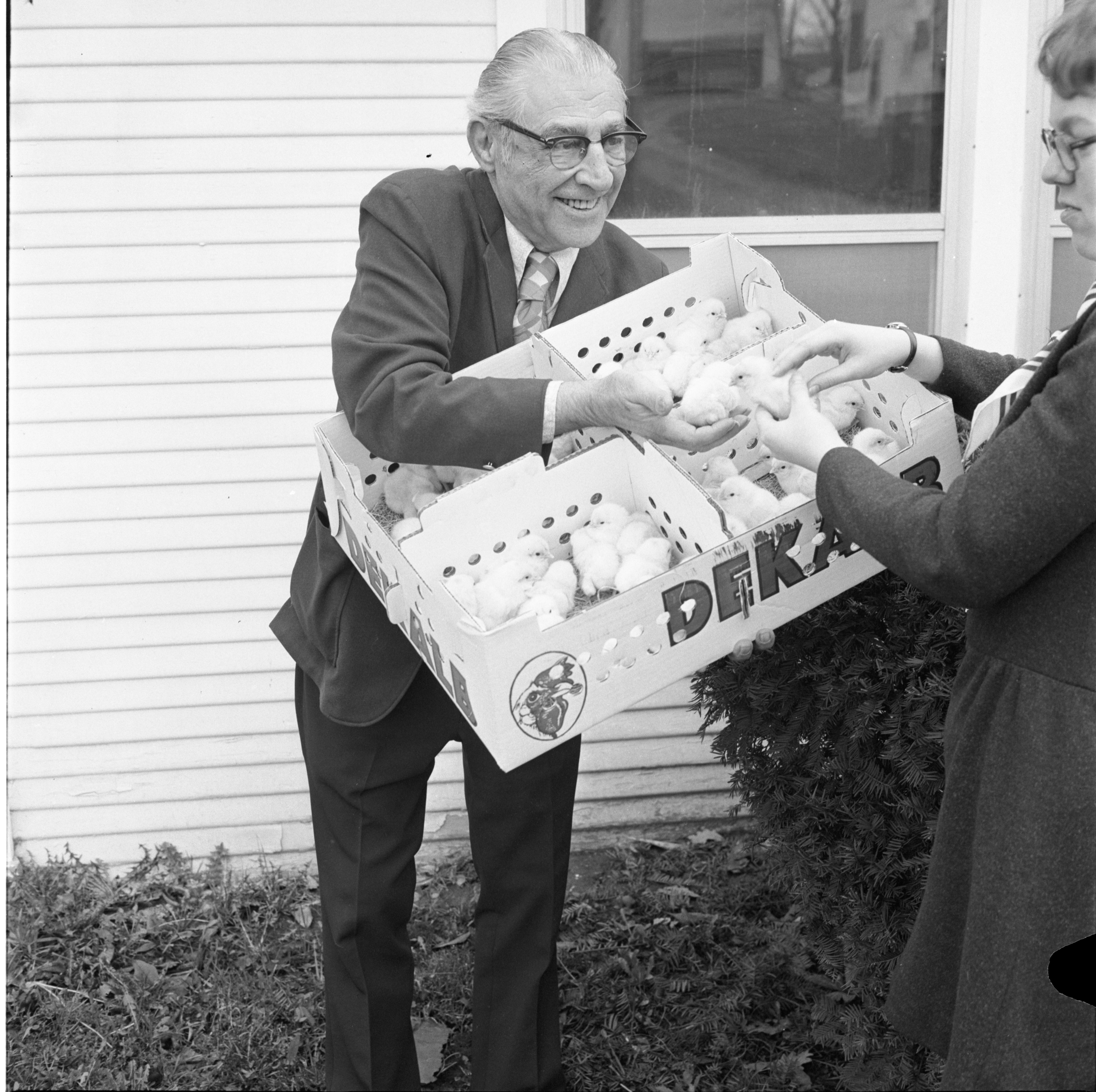 Luther Klager Displays Day-Old Chicks From Klager's Hatchery, April 1973 image