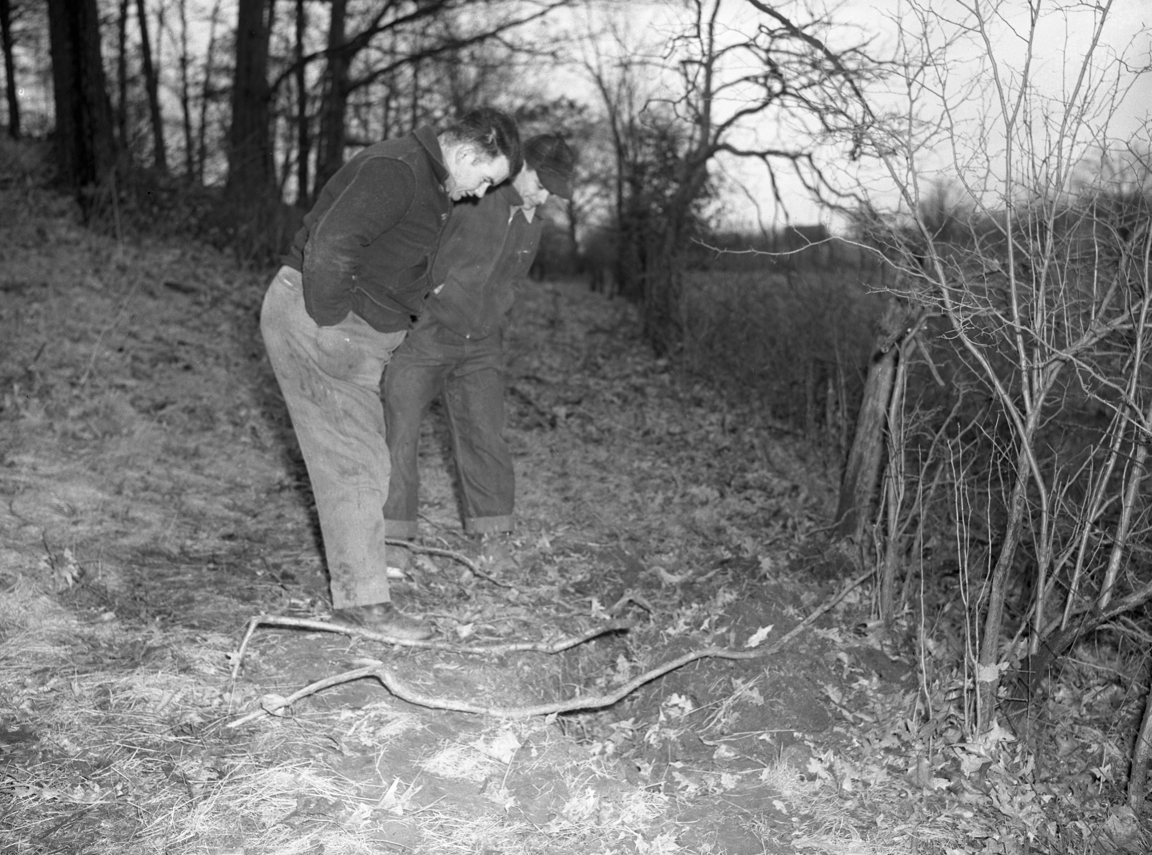 Searching for Evidence on Oscar Buss Farm Where Burned Body of Orville Wurster Was Found, March 1942 image