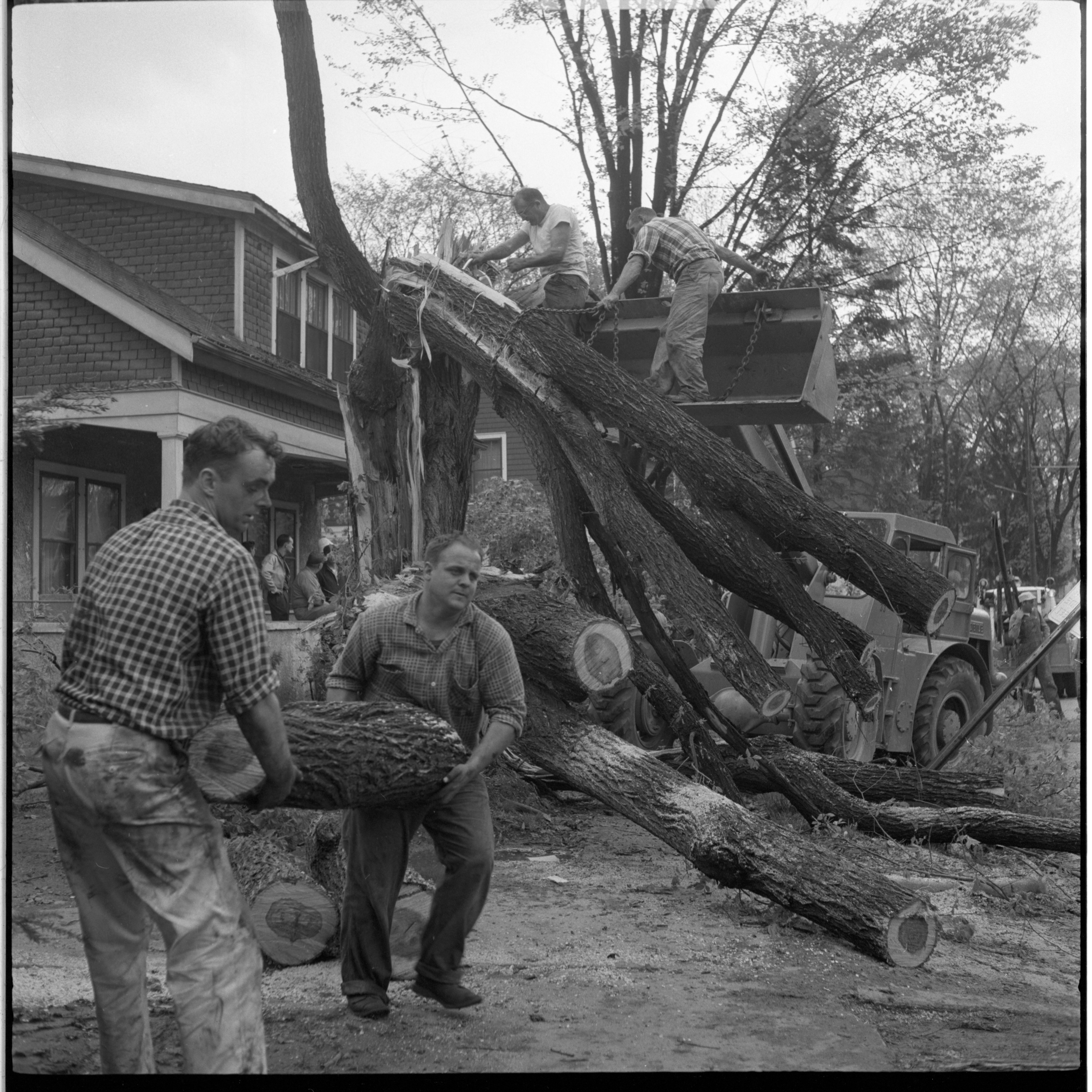 Residents Work To Clear Fallen Trees On Brookwood Place After Windstorm, May 1959 image