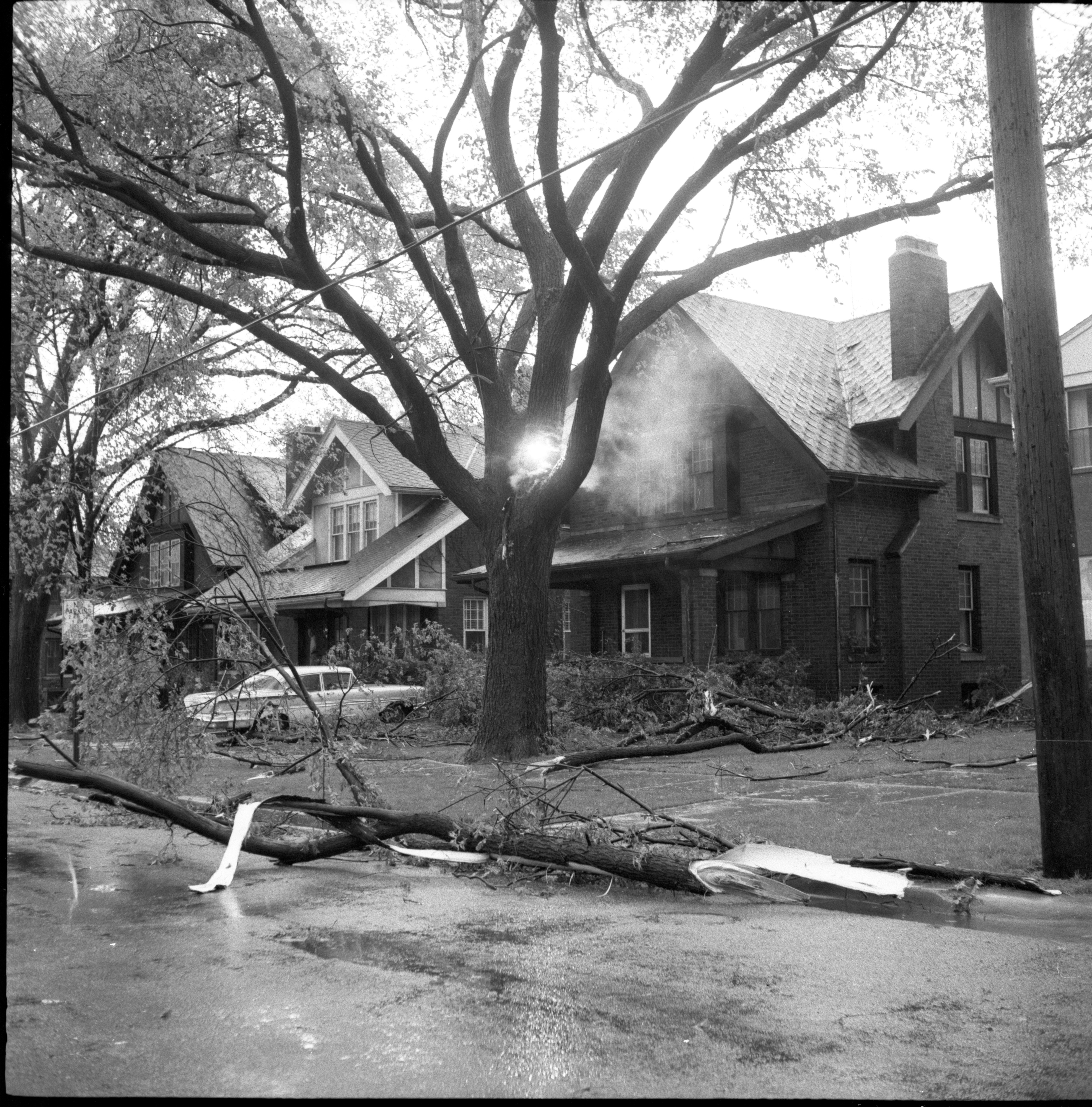 Downed Electrical Wire Burns In Tree After Windstorm, May 1959 image
