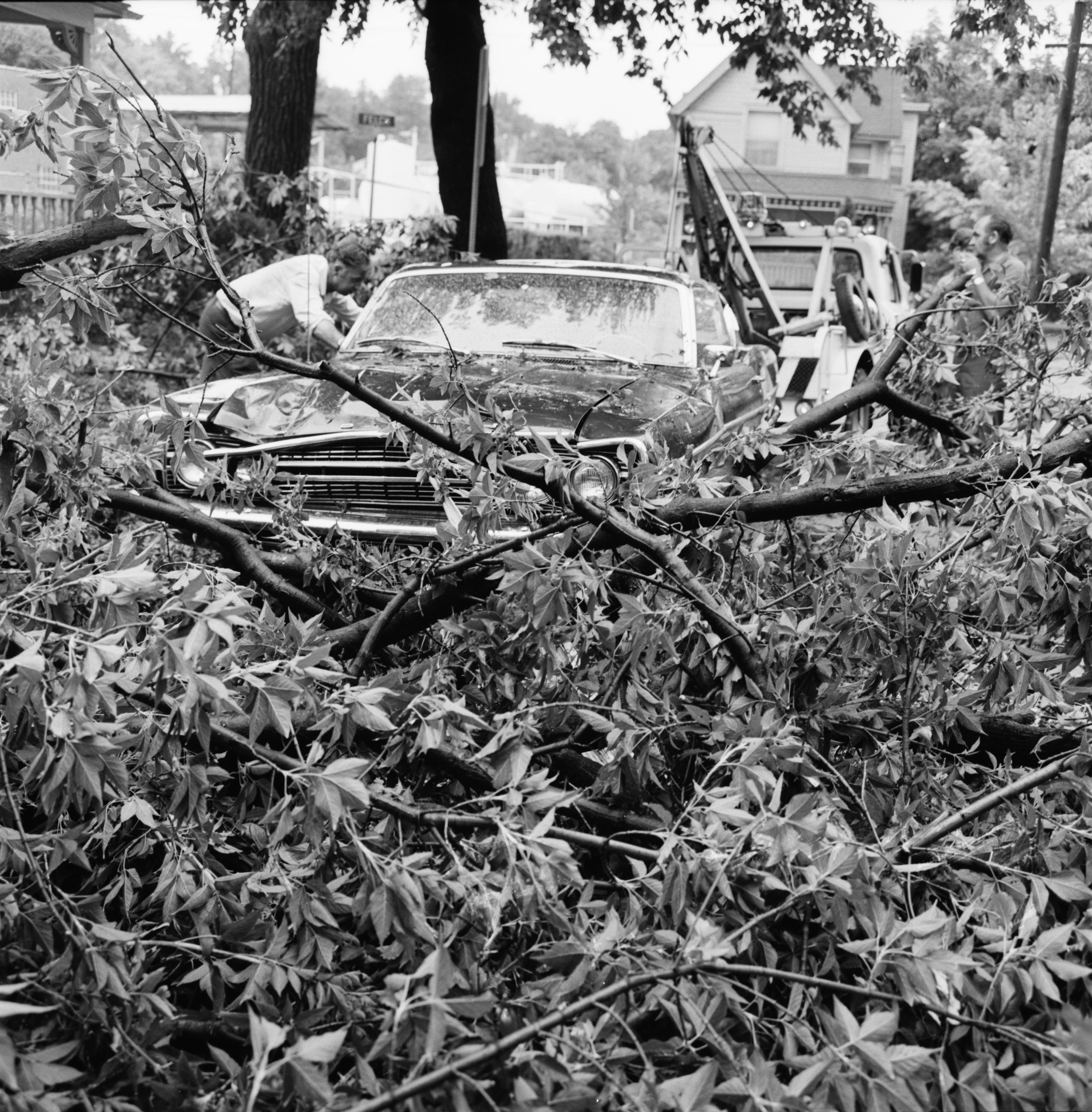 Wind blows tree over on car, July 1972 image