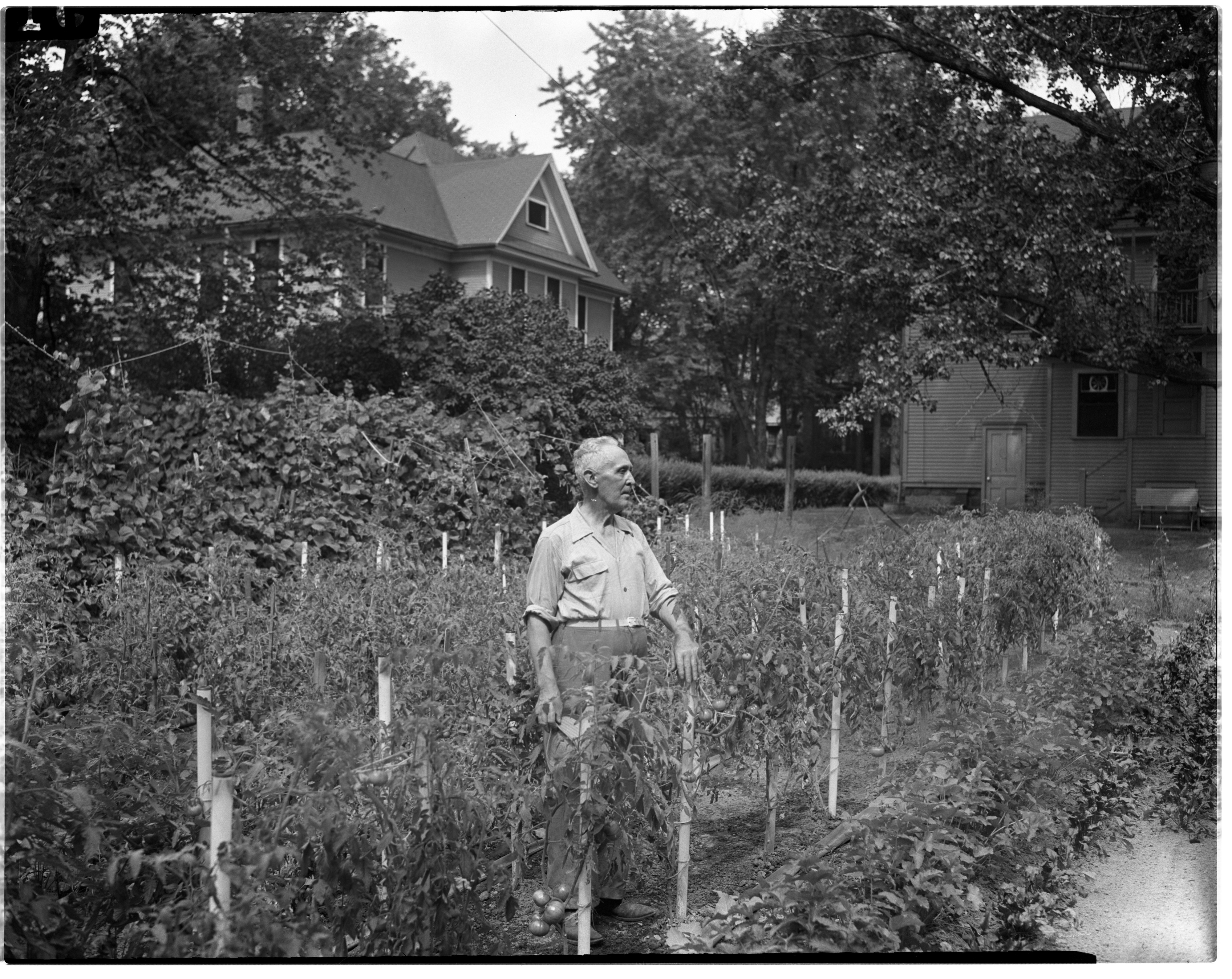 Victory Garden, 922 Olivia St, August 1945 image