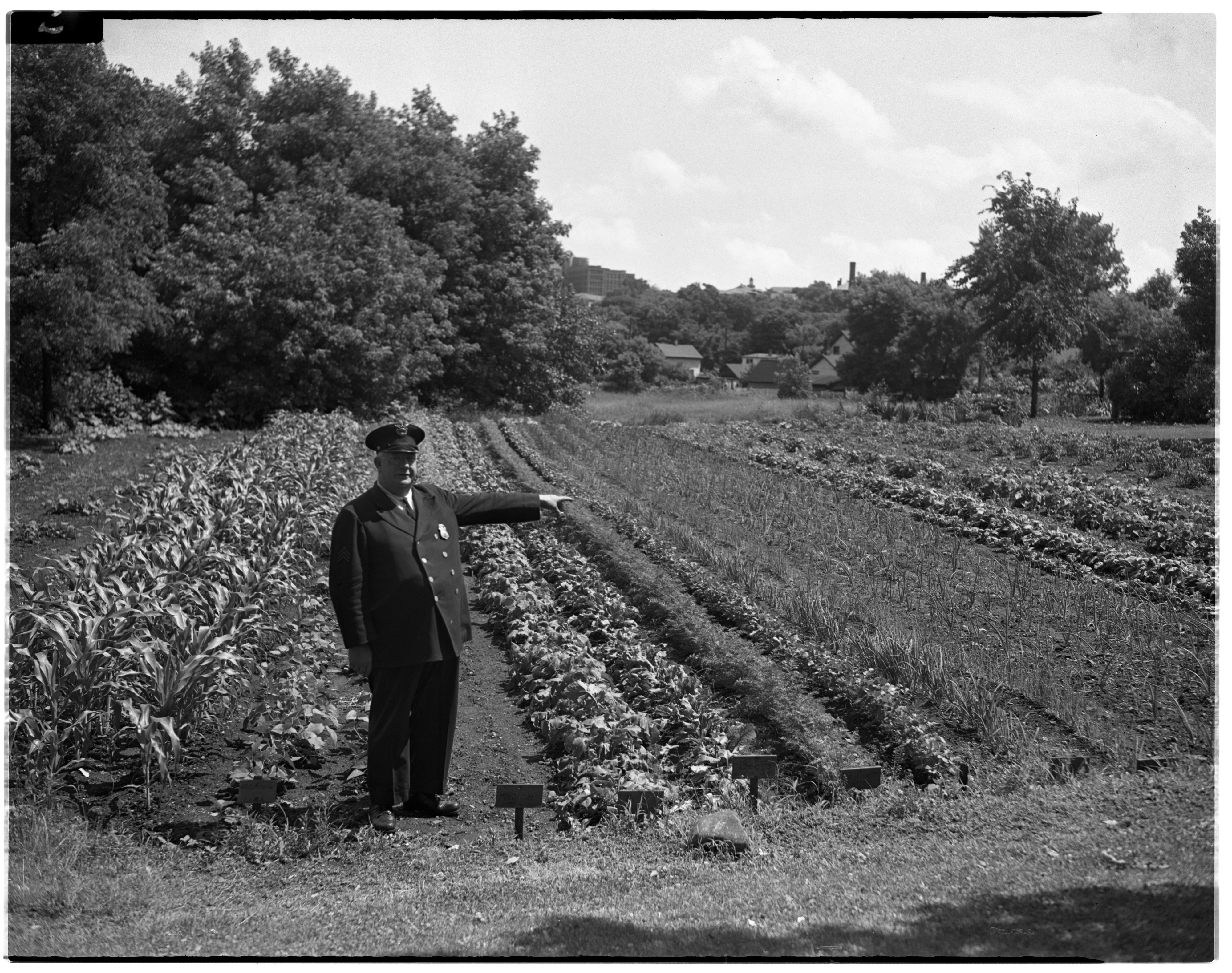 "Sergeant M. G. ""Red"" Howard in front of a Victory Garden, June 1943 image"