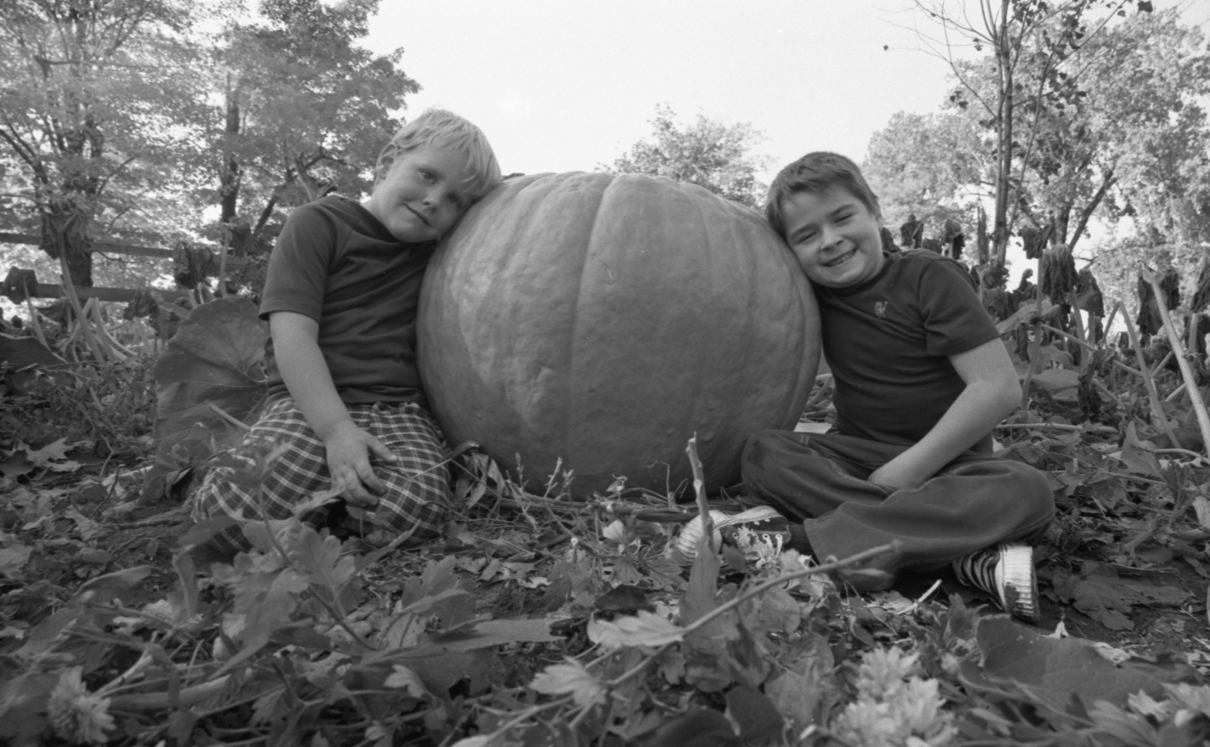 Andy Potter & Tim Michalak With A Giant Pumpkin, October 1975 image