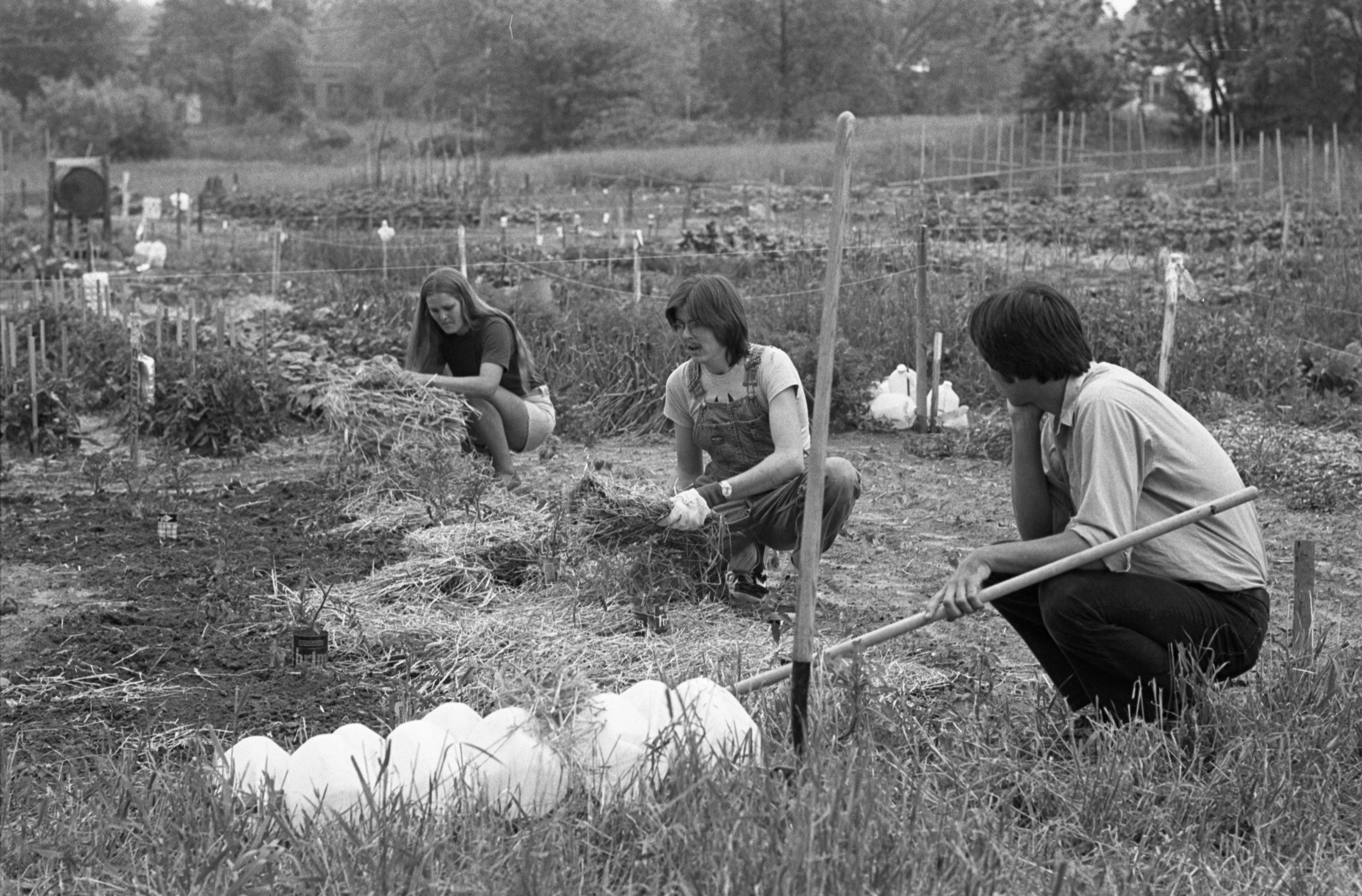 Working At The Community Farm, June 1977 image
