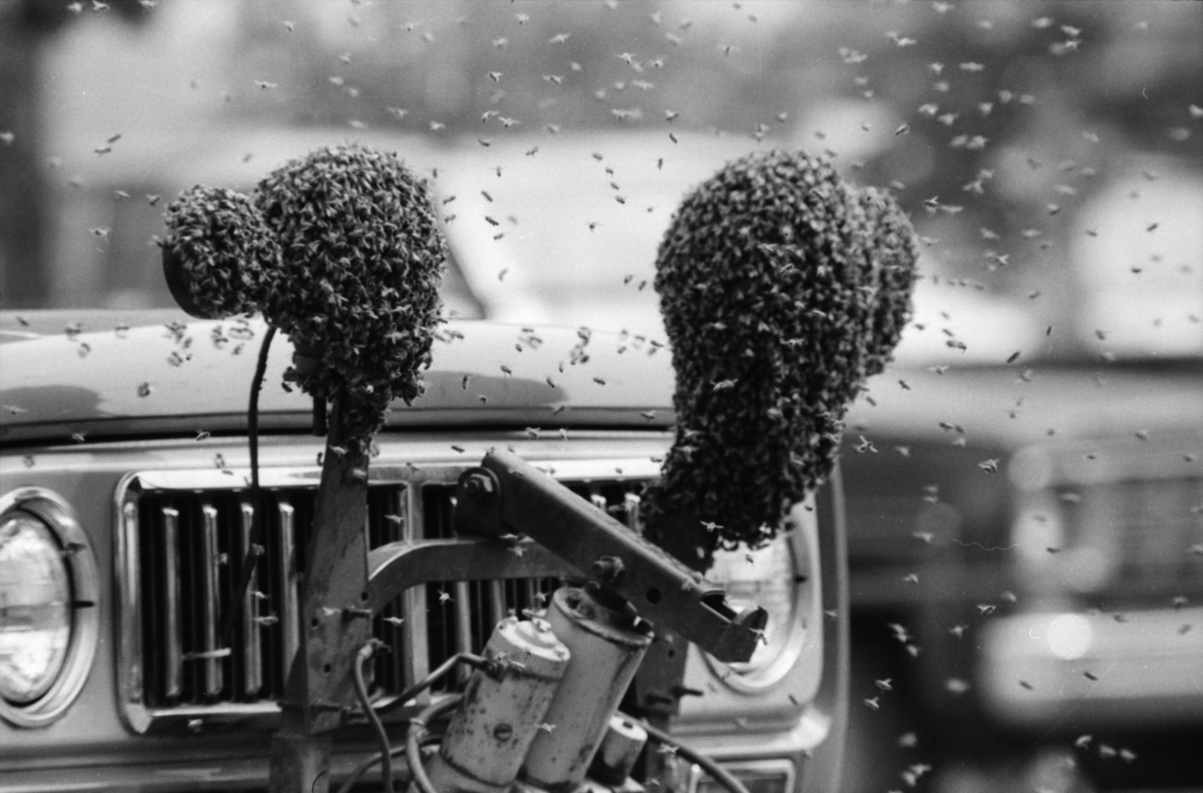 Bees Swarm an Ann Arbor News Truck, May 1980 image