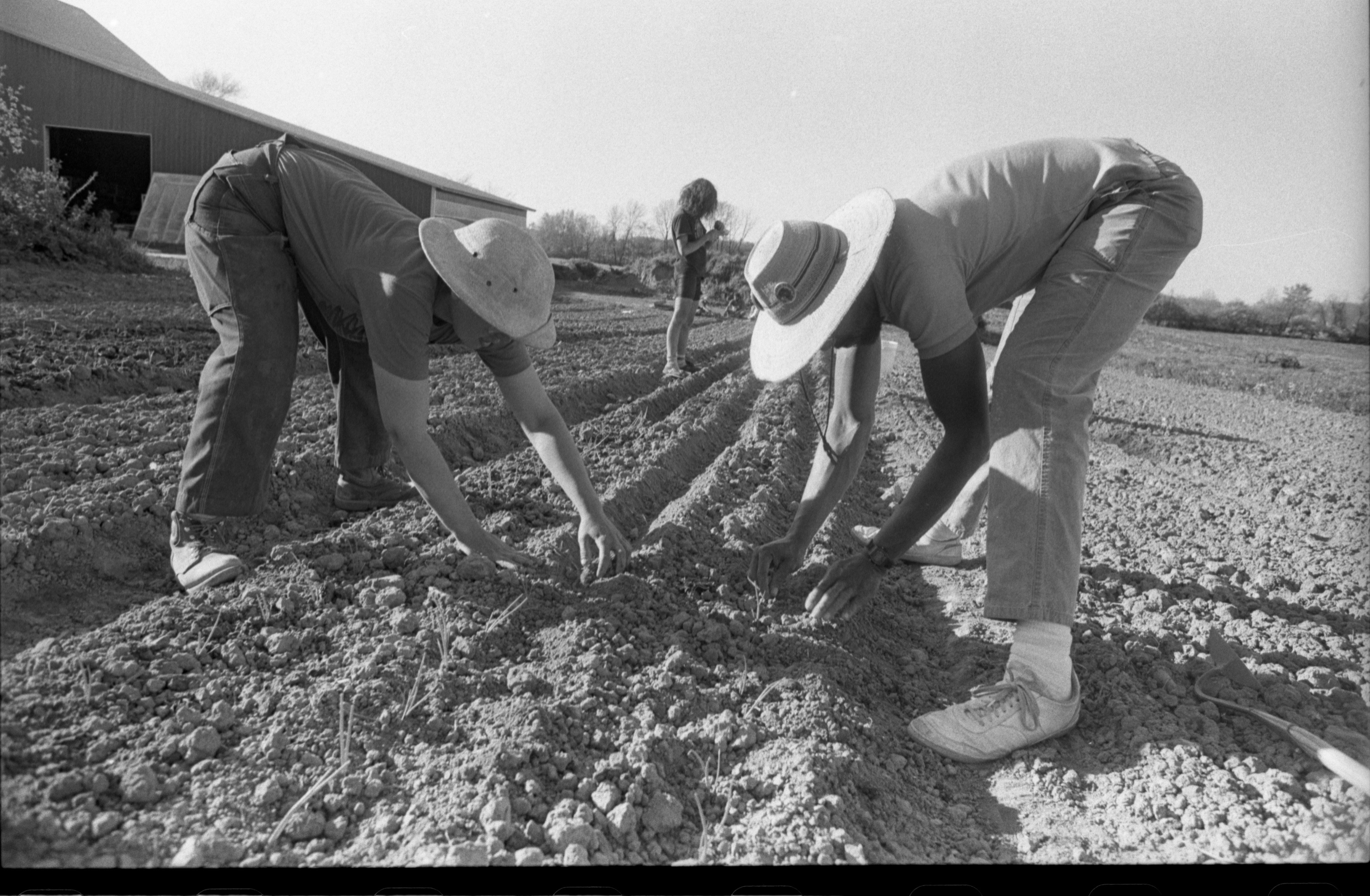 Planting Seeds At Community Farm, May 1988 image