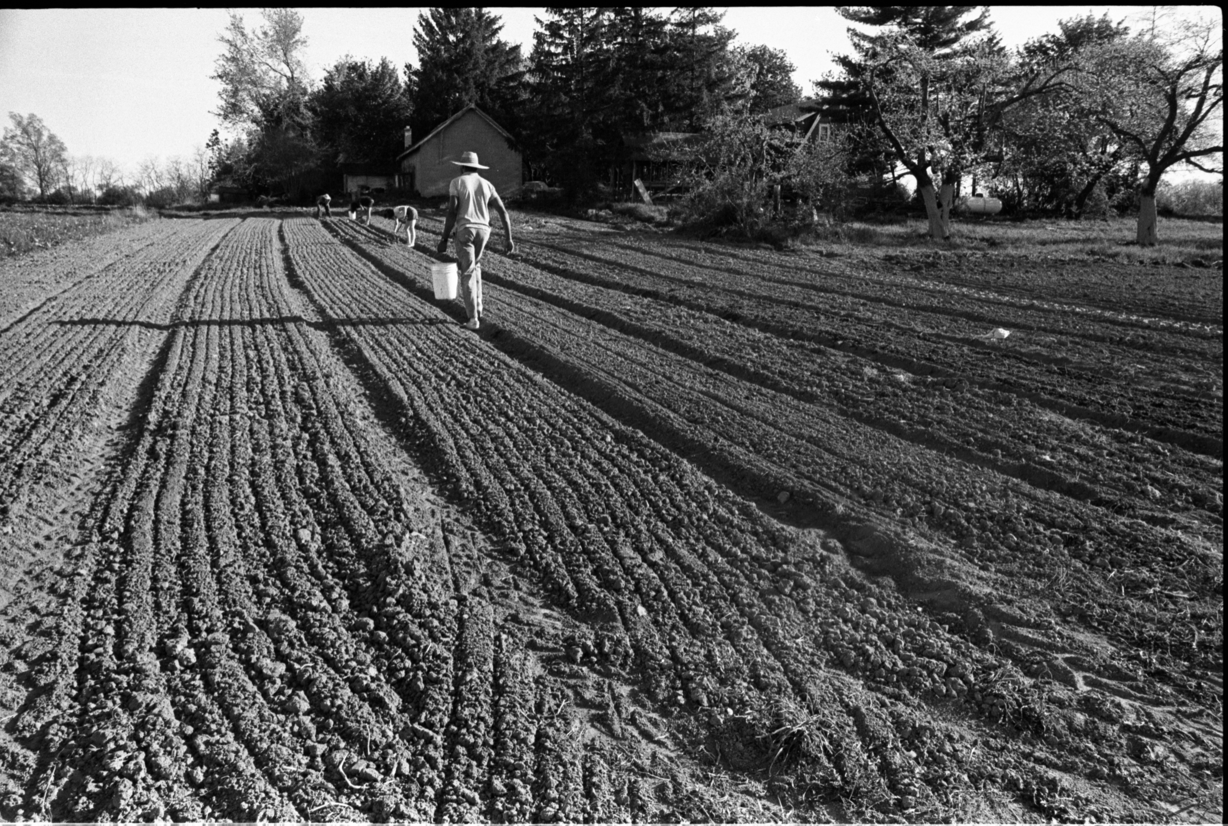 Workers In The Field At Community Farm, May 1988 image