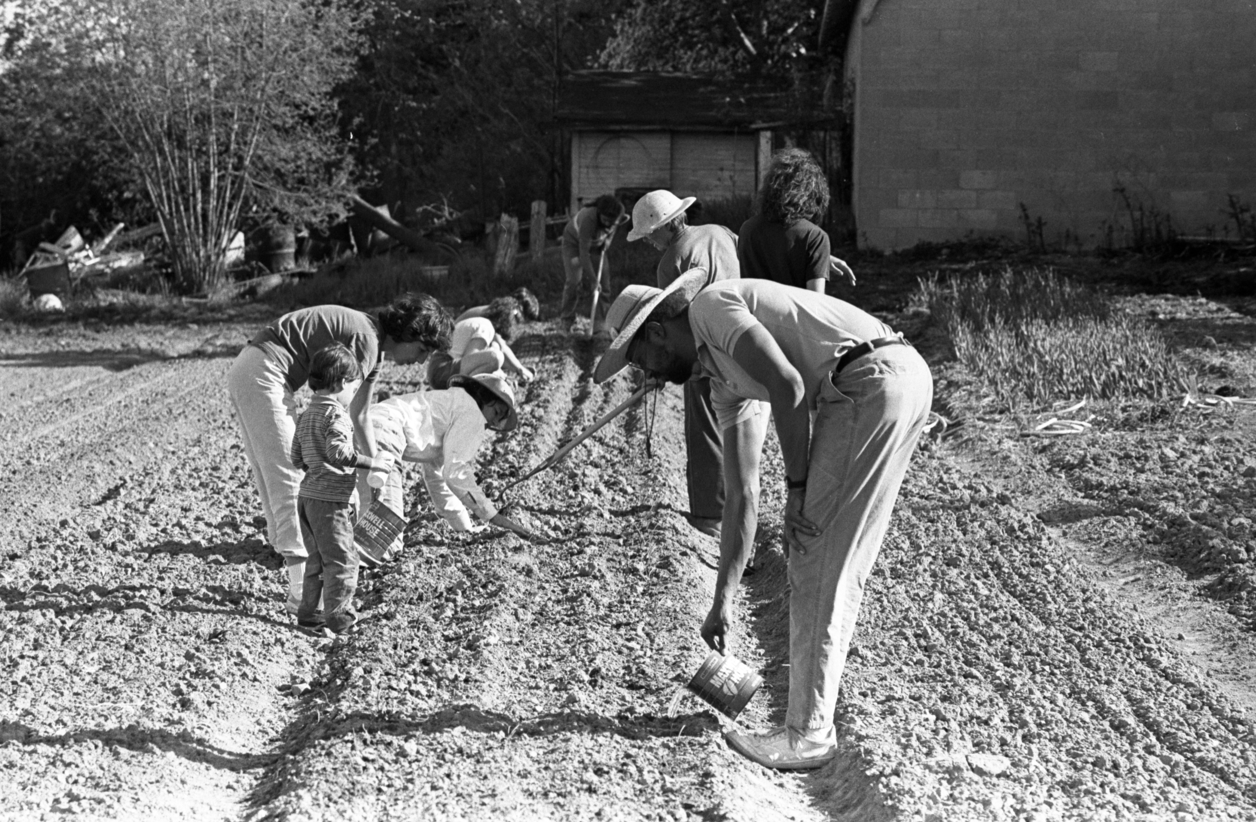 Planting At Community Farm, May 1988 image