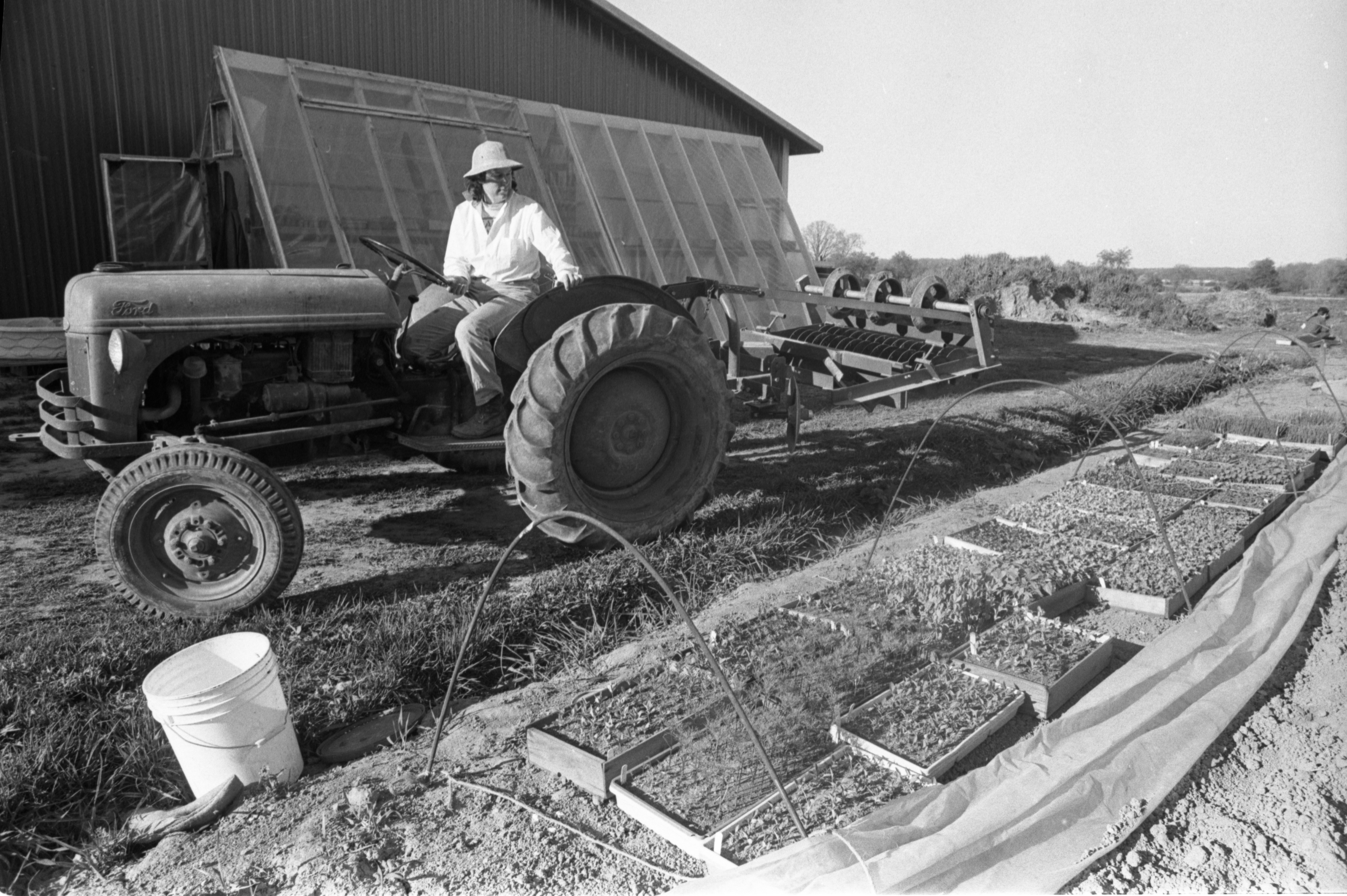 Marcia Barton Drives The Tractor By The Hoop Gardens At Community Farm, May 1988 image