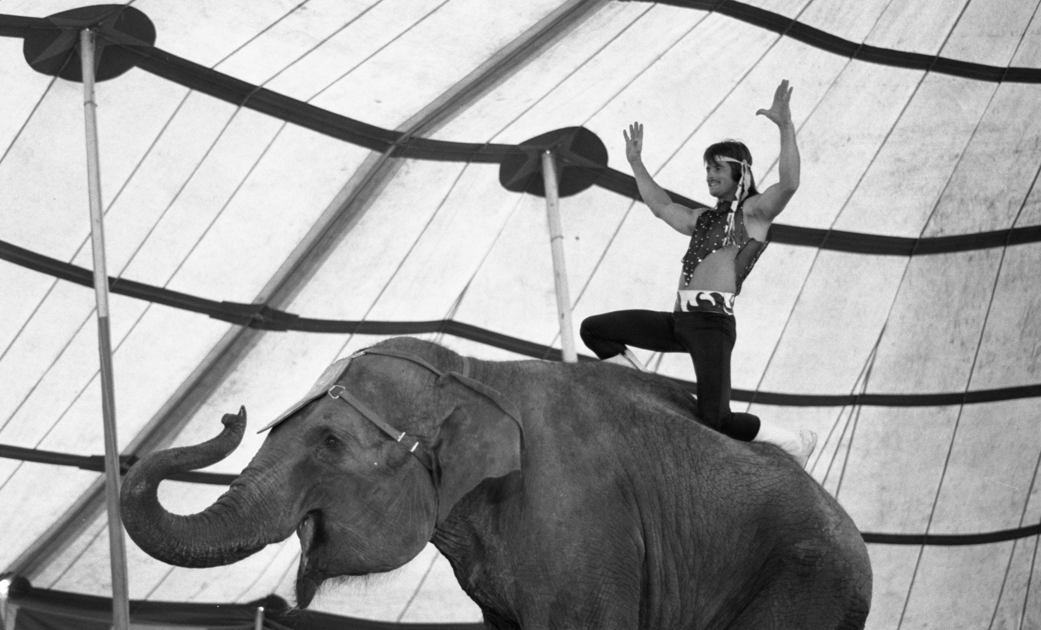Royal Hanneford Circus Performer Rides An Elephant At The Brighton Mall, June 1984 image