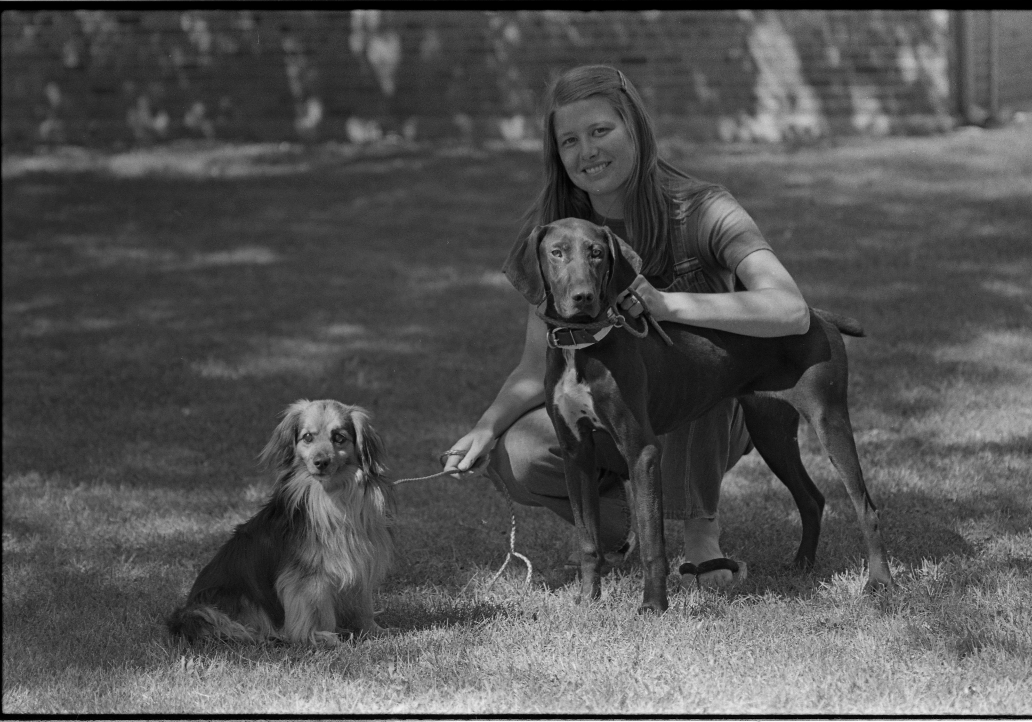 Humane Society Worker Susan Krause With Lost Dogs, July 1979 image