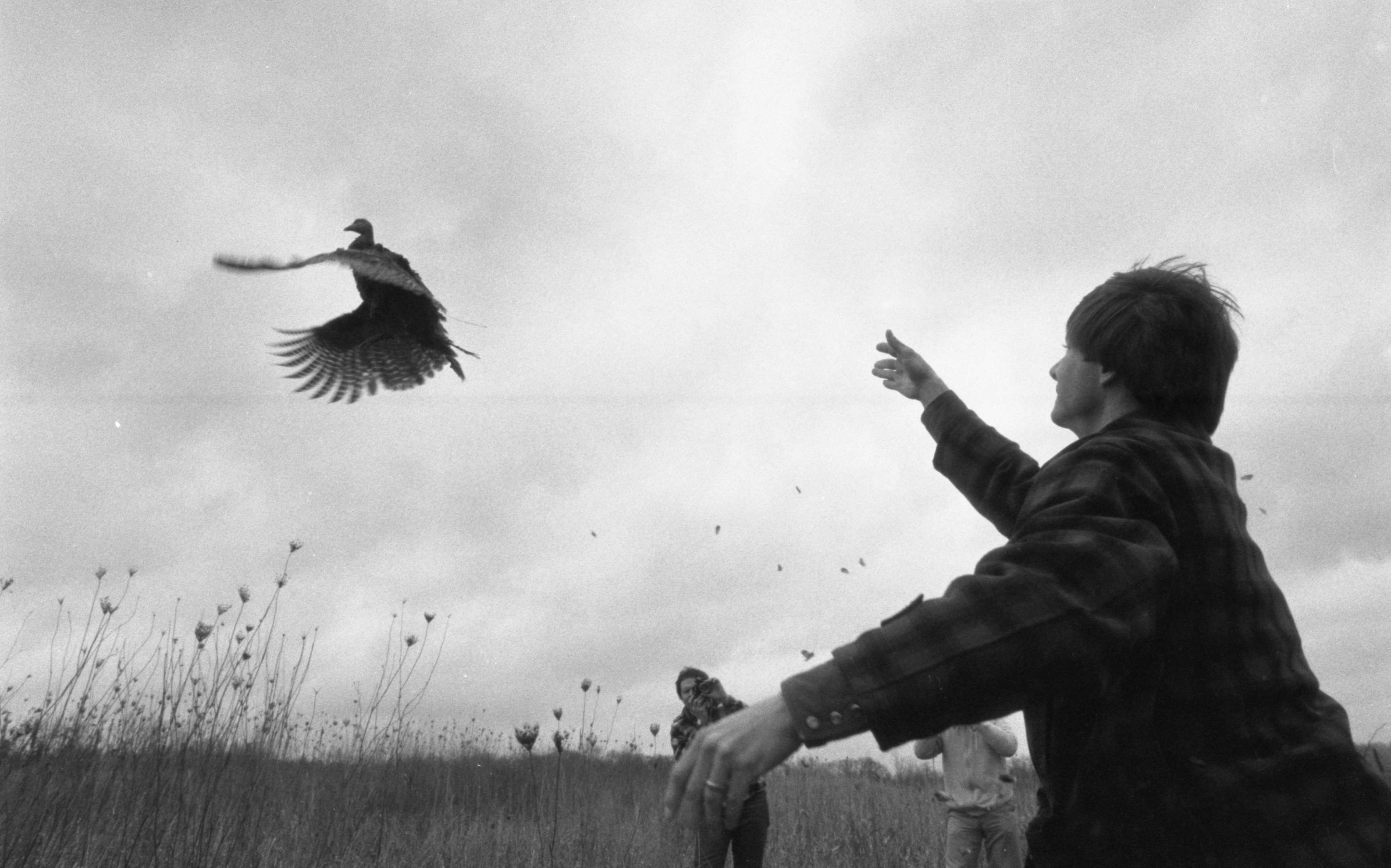 Wayne Bronner Releases A Wild Turkey At Waterloo Recreation Area, February 1983 image