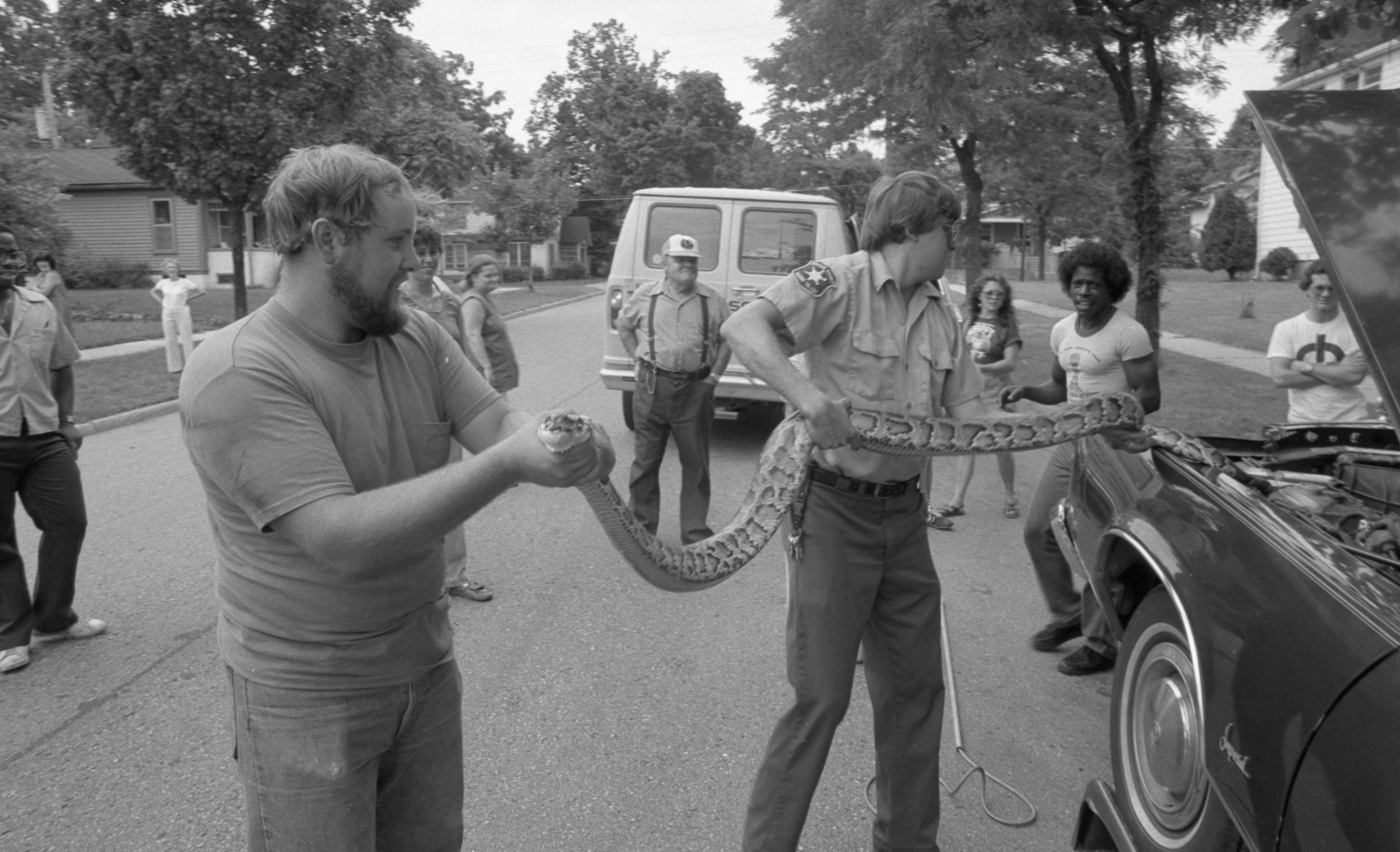 Humane Society Employees Remove A Python From The Engine Of A Car, August 1983 image