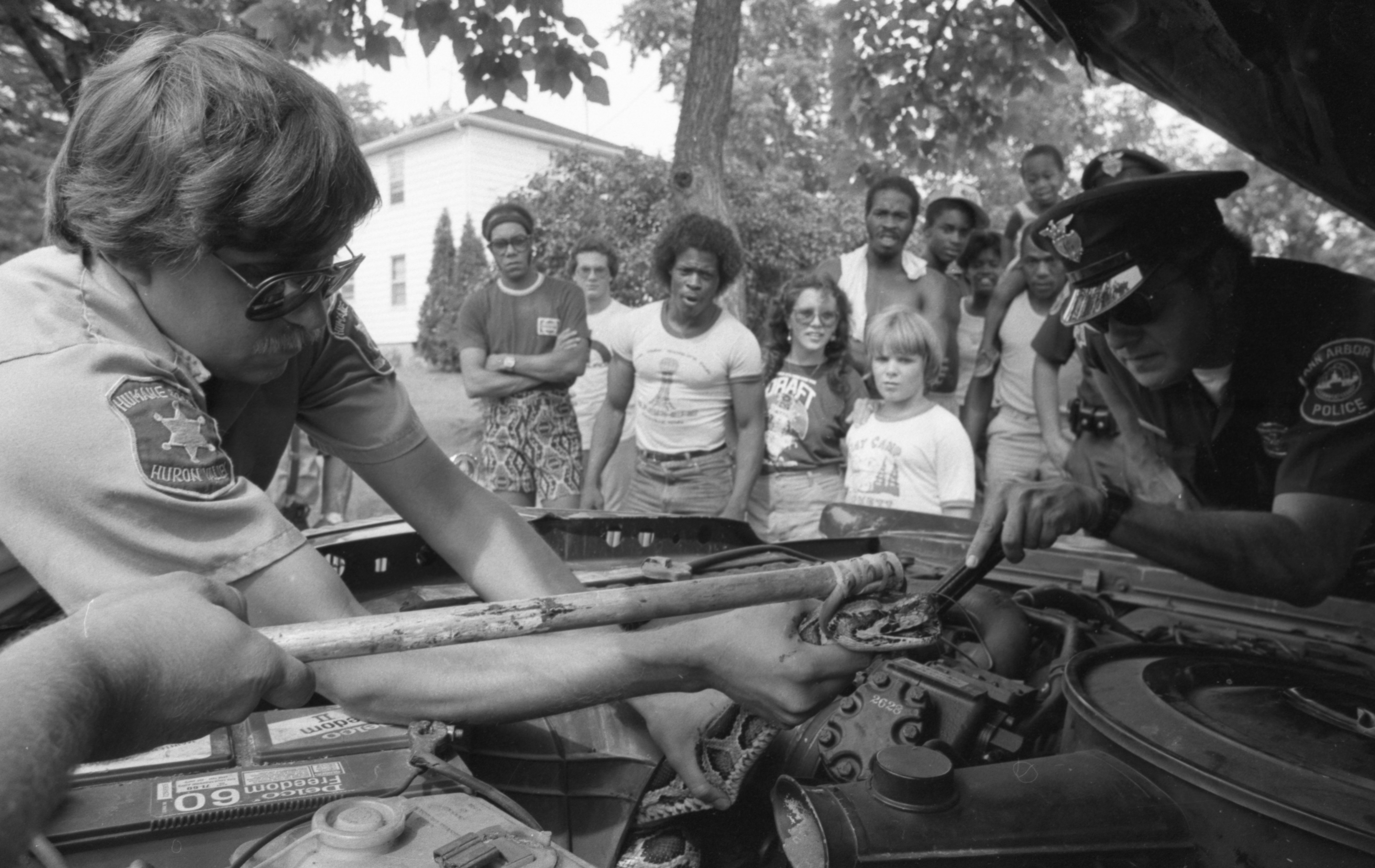 Humane Society Employees & Ann Arbor Police Officers Remove A Python From The Engine Of A Car, August 1983 image