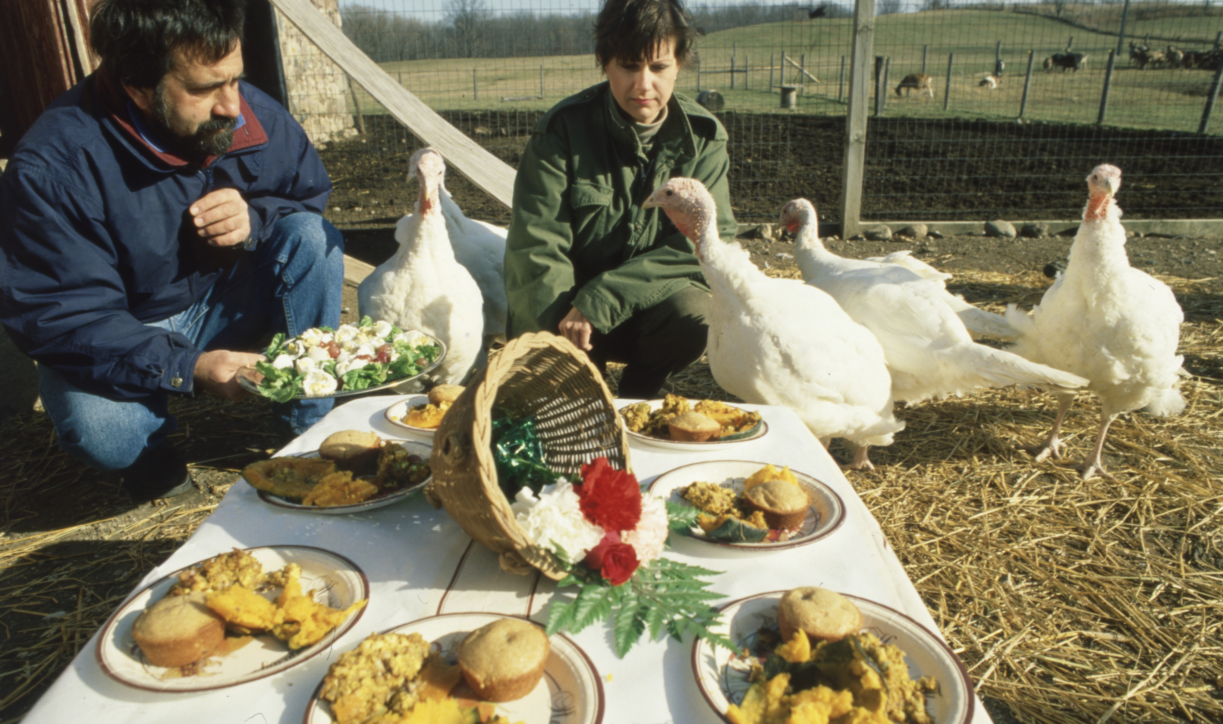 Vegetarian Meal Served To Turkeys, November 1991 image