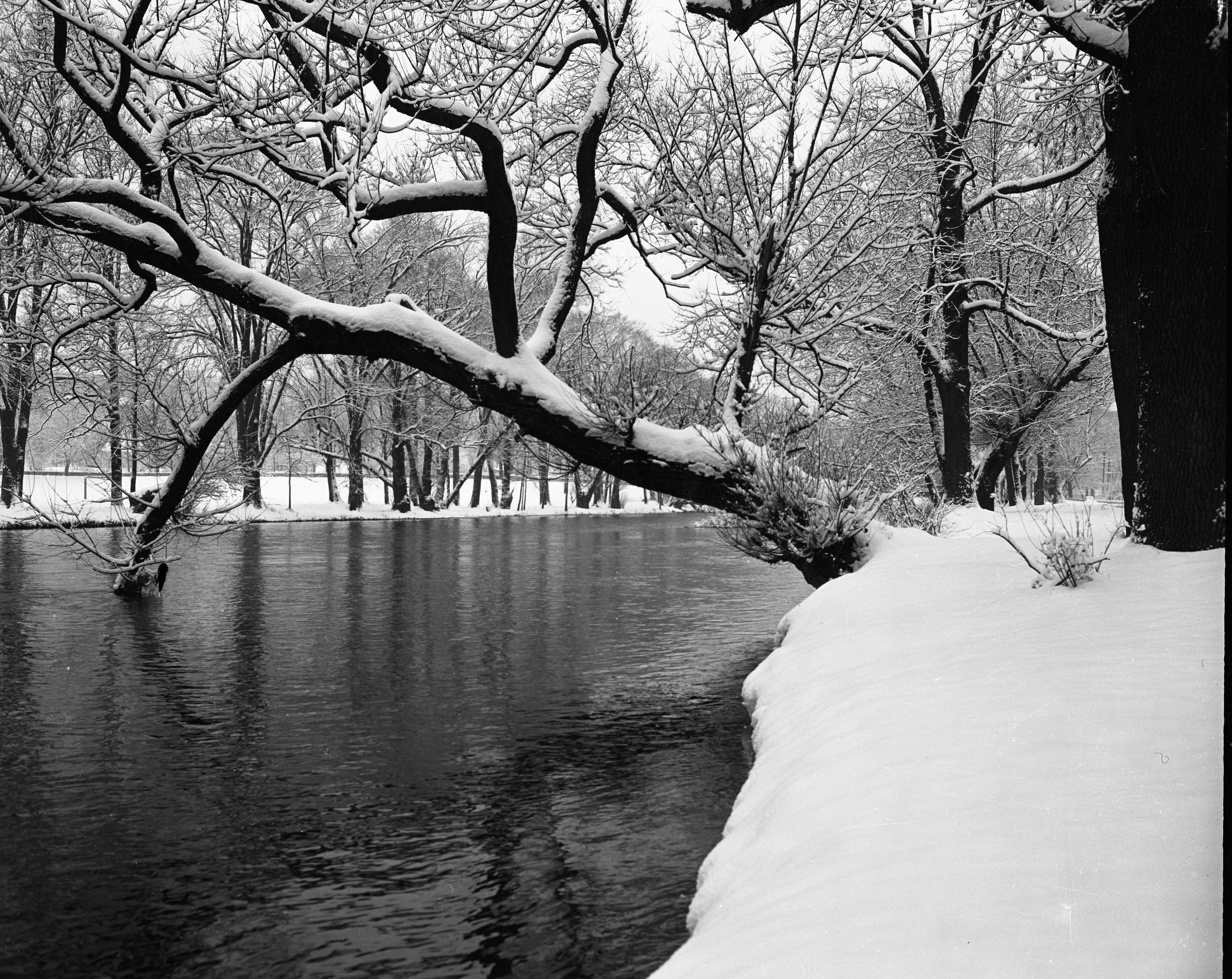 First Snow, Huron River, November 1955 image