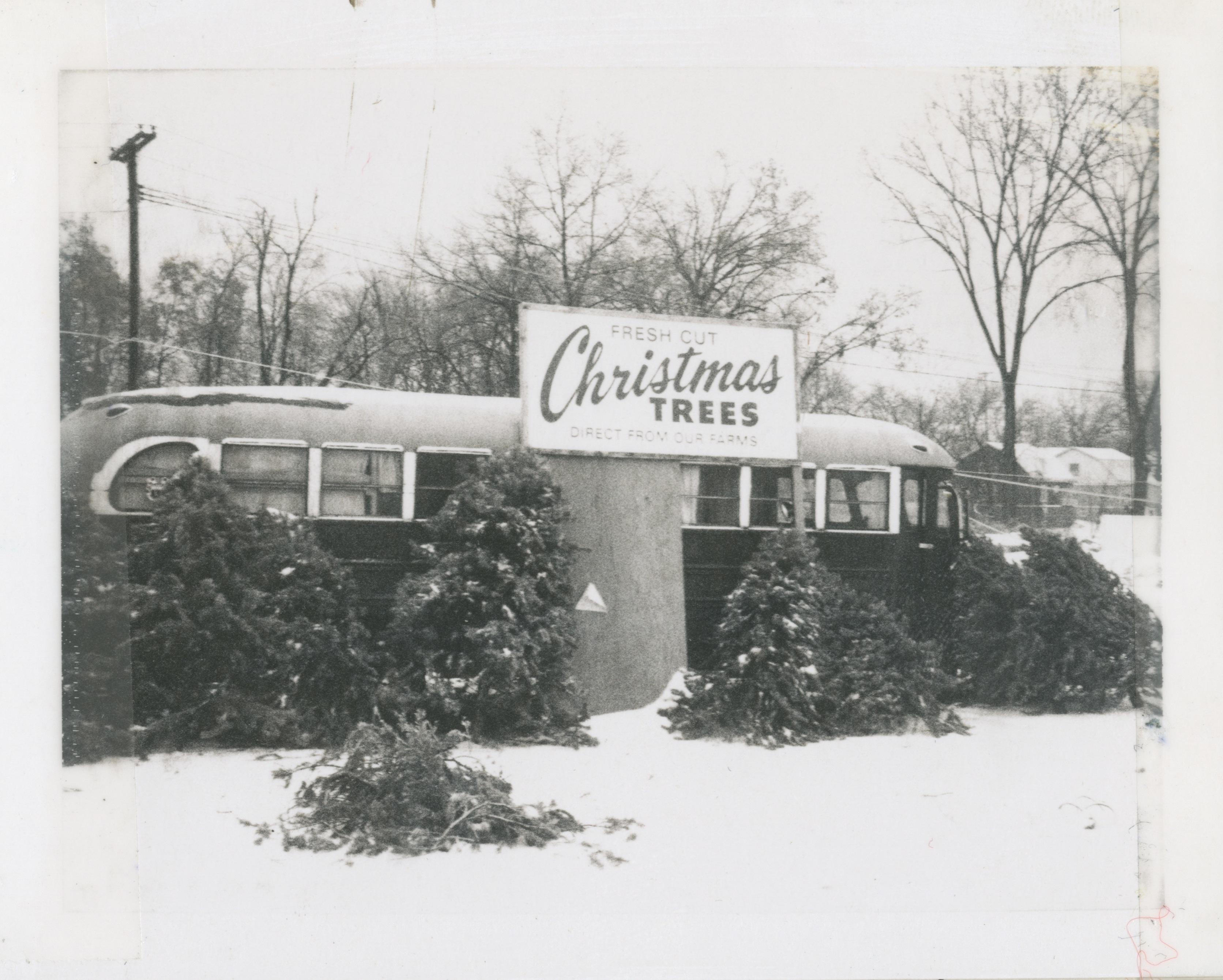 christmas tree lot 1972