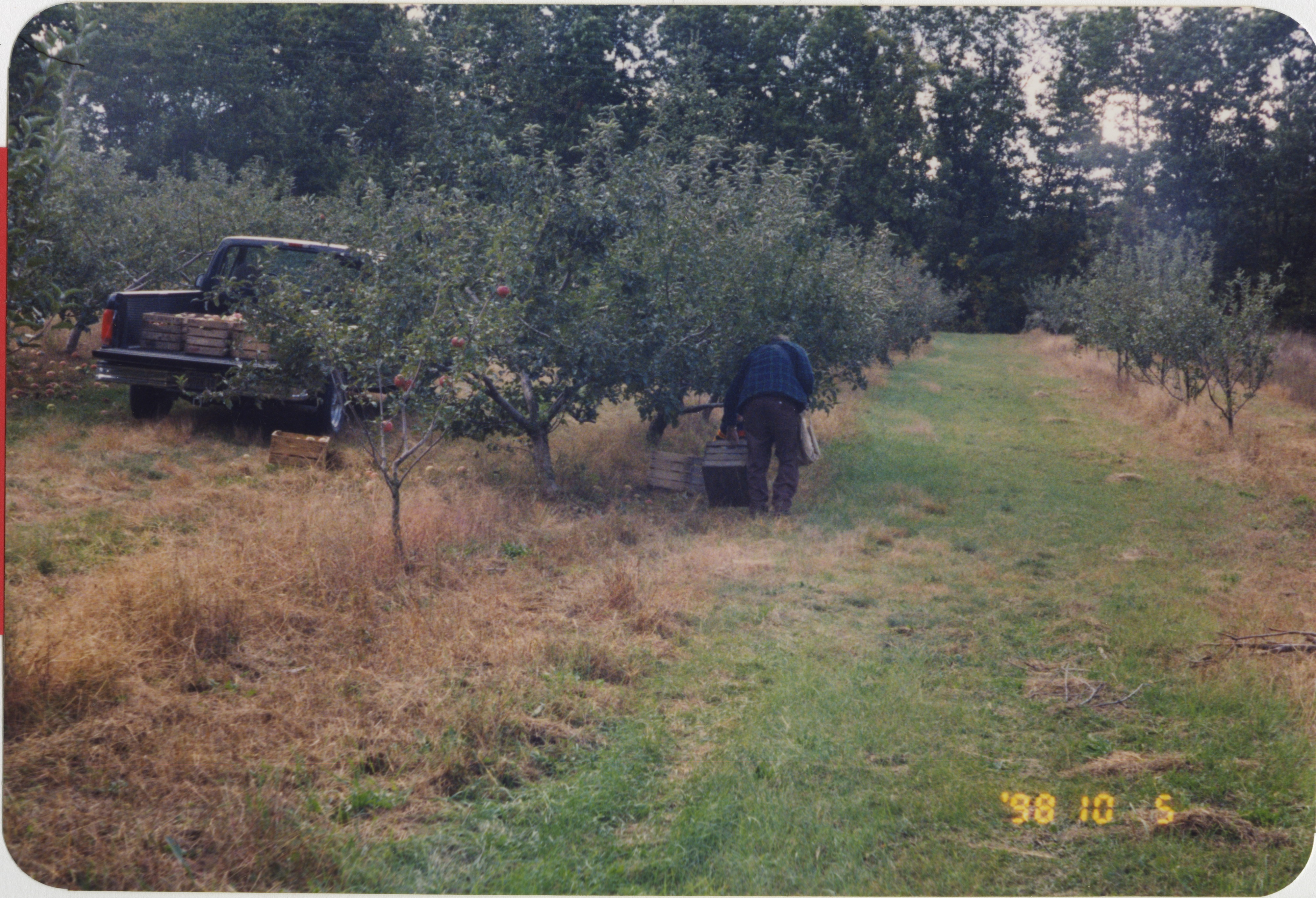 Harvest Time at Nemeth Orchards, 1998 image