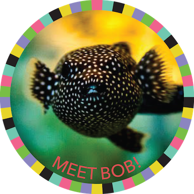Meet Bob!  badge image