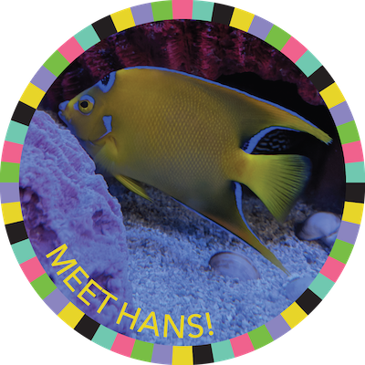 Meet Hans!  badge image
